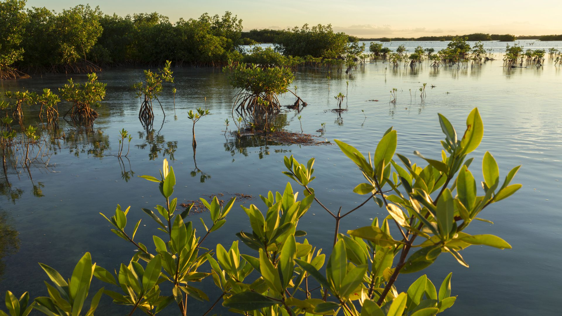 Mangrove forest, which is an ecosystem at particular risk.