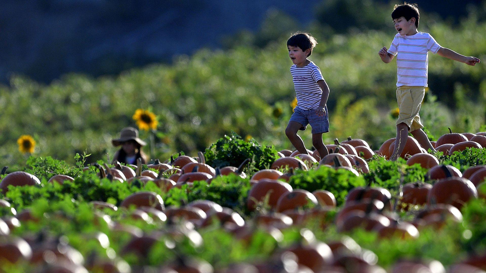 Two boys run through a pumpkin patch