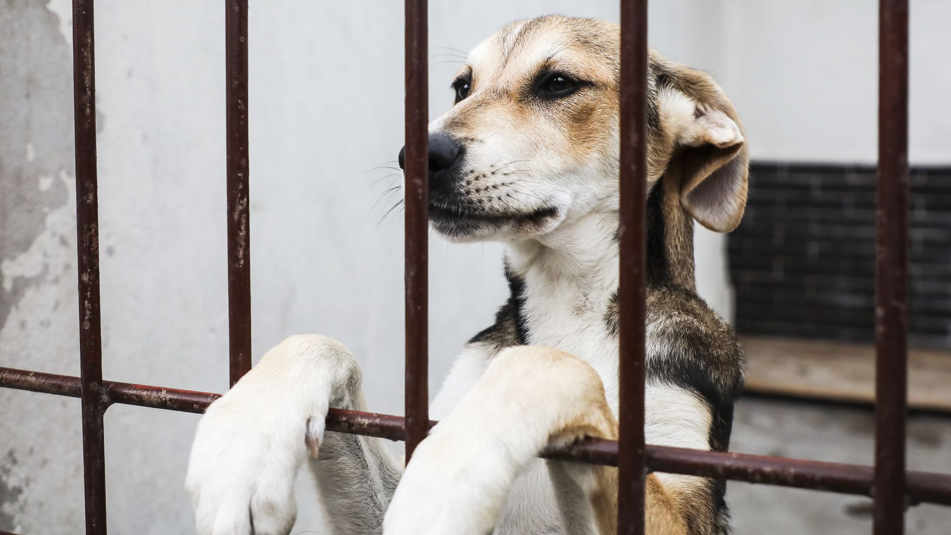 An animal in a cage with its paws sticking out.