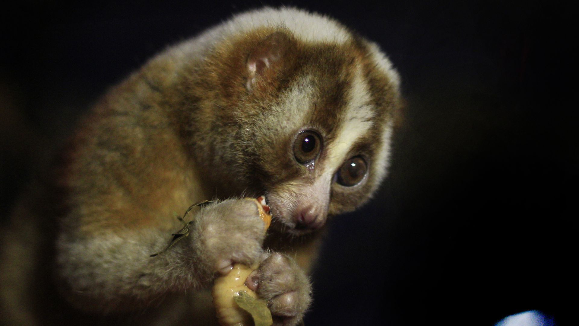 The start-up gets its name from this sloth-like animal, the Loris