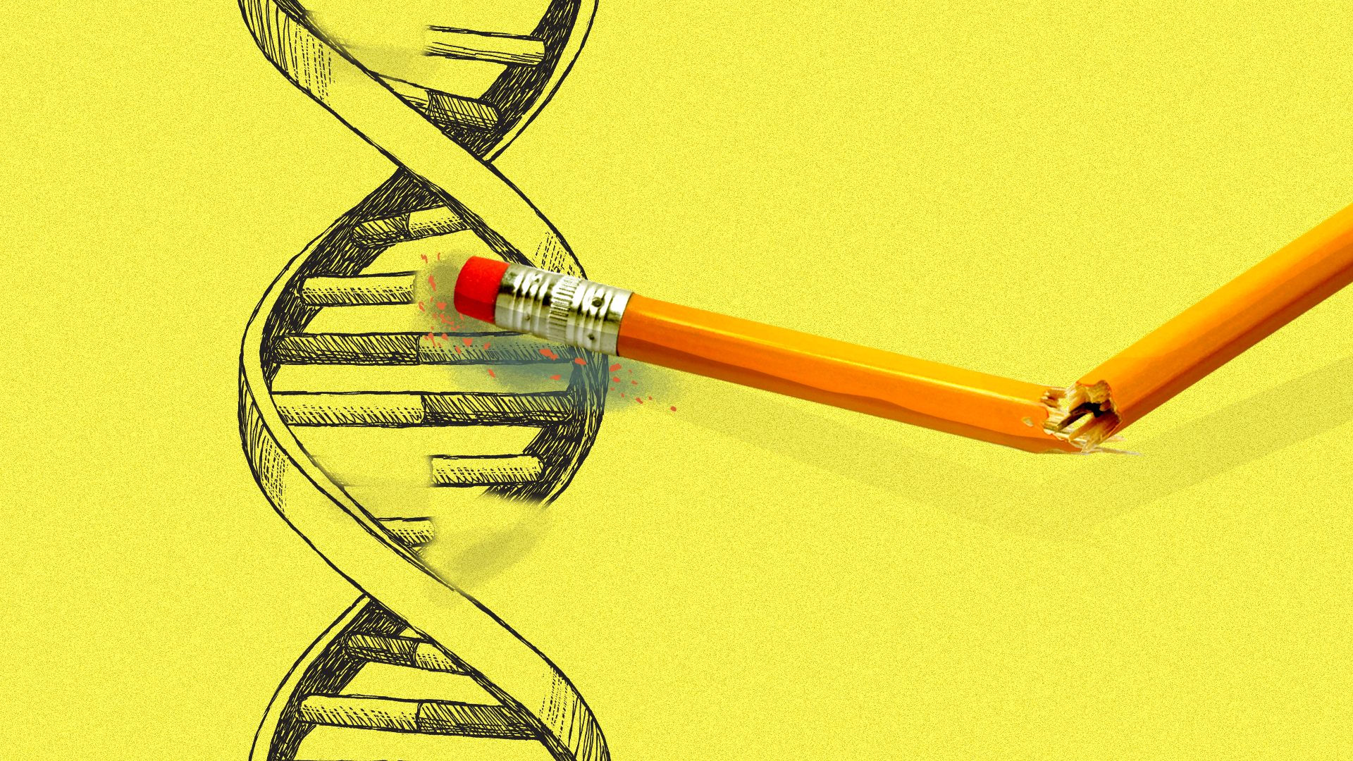 Illustration of a double stranded DNA helix with a broken pencil erasing part of one strand
