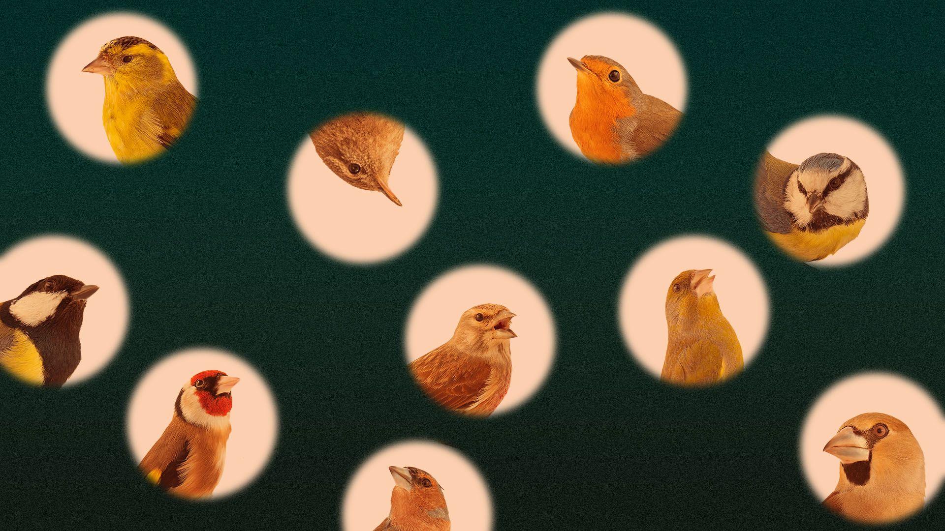 Coronavirus quarantine is a great time to get into birding