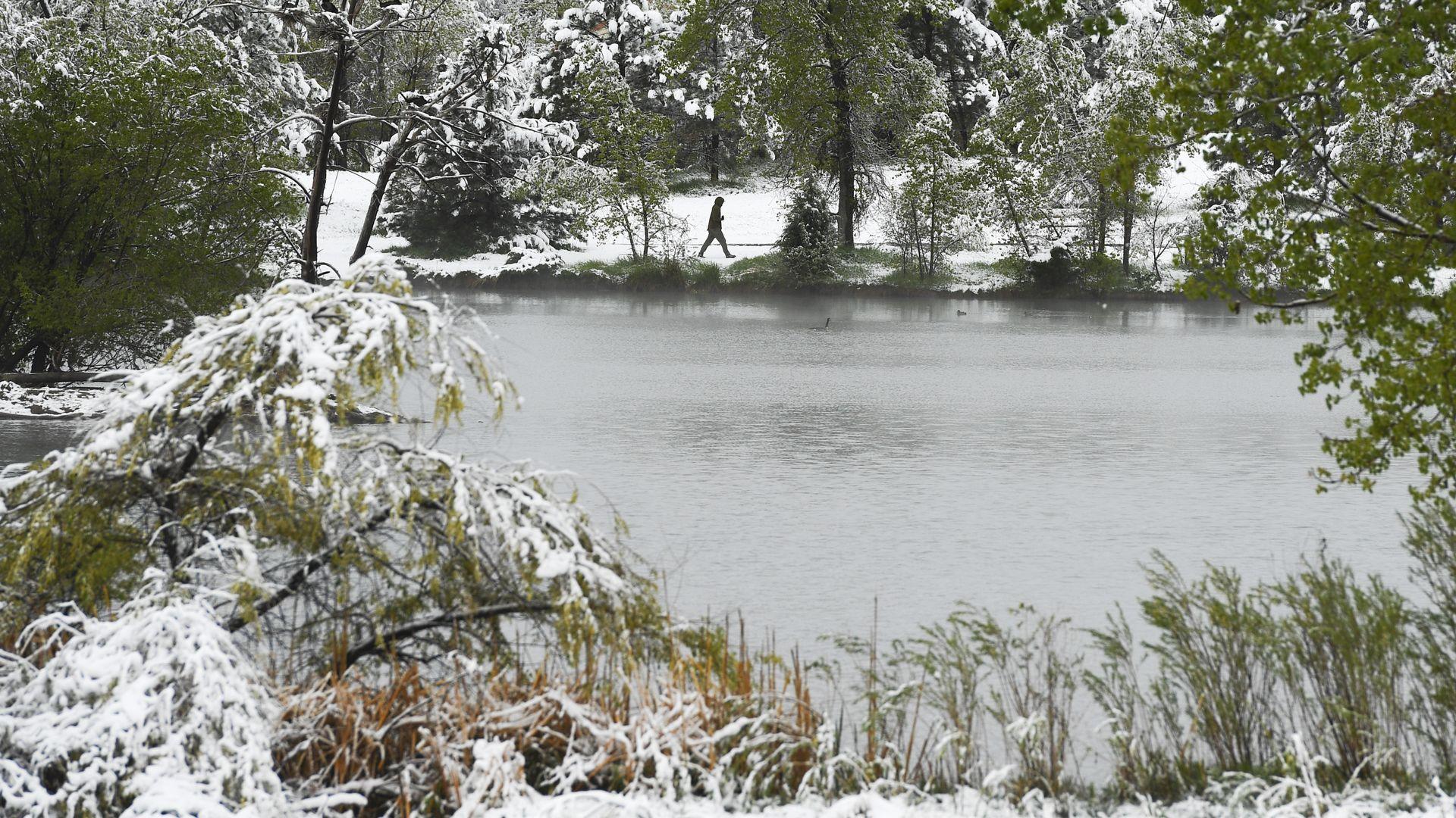 Snow on trees around a lake