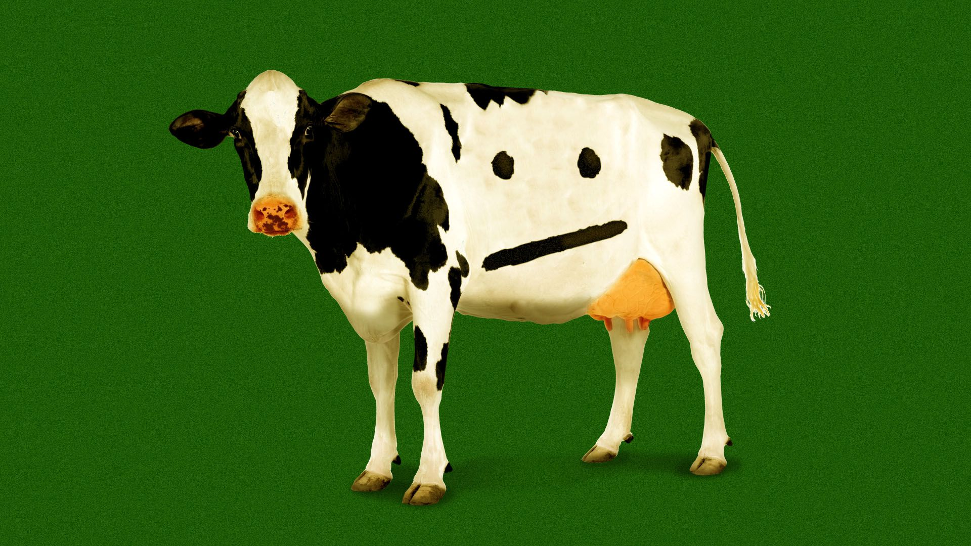 Illustration of a cow with markings in the shape of a neutral face.
