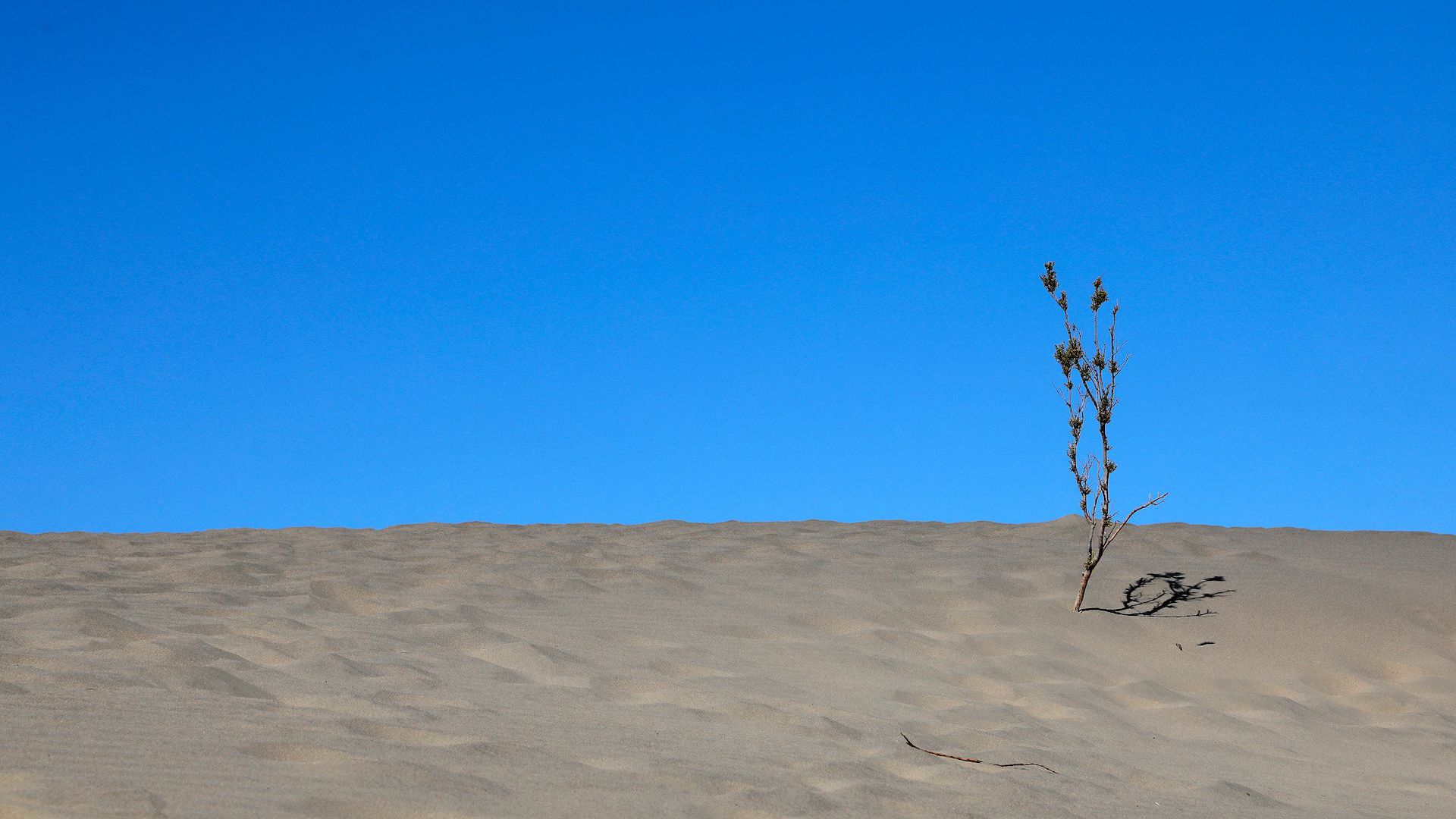 A sand dune and small plant in Death Valley National Park.