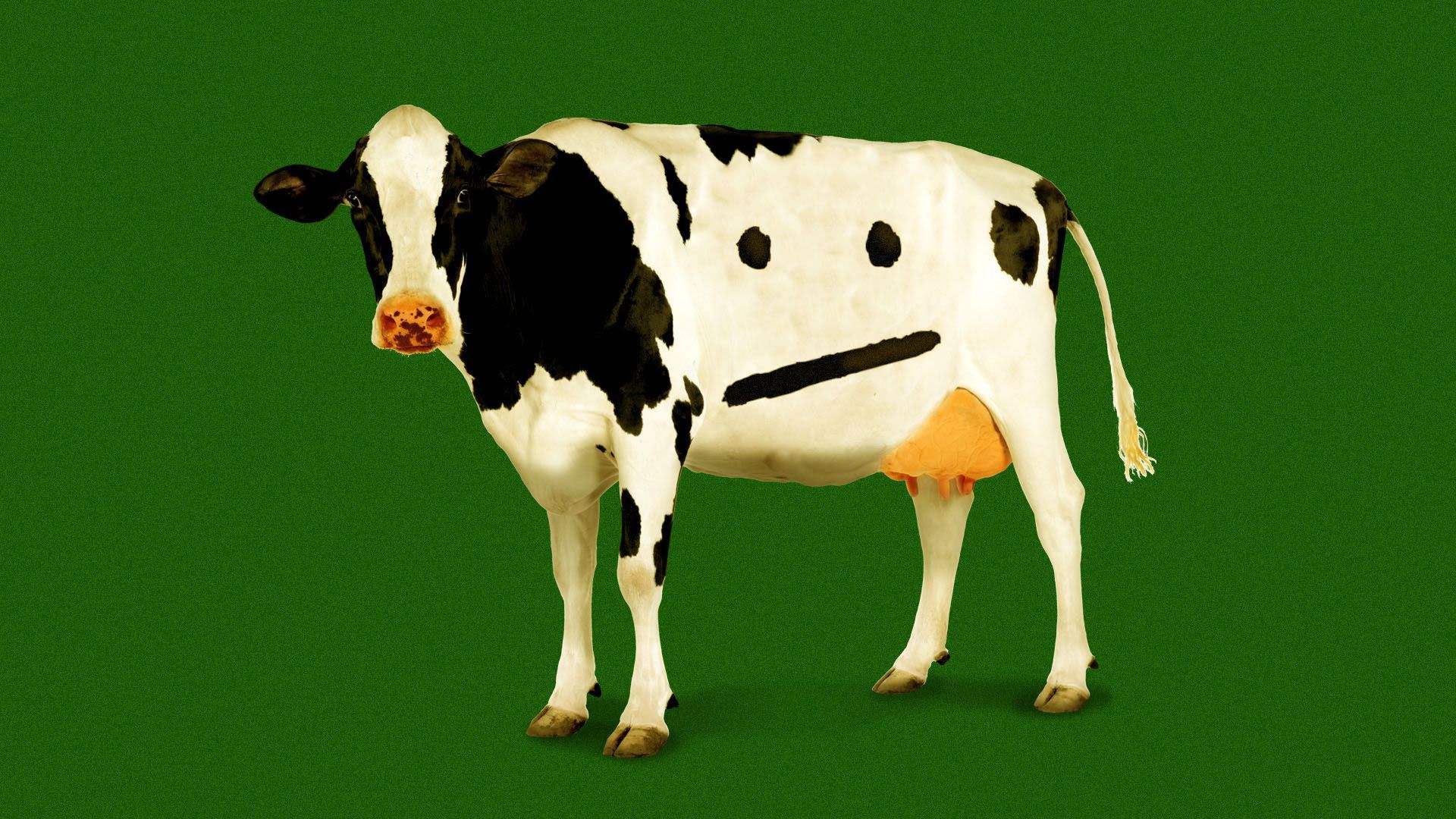 Illustration of a cow with markings in the shape of a neutral face