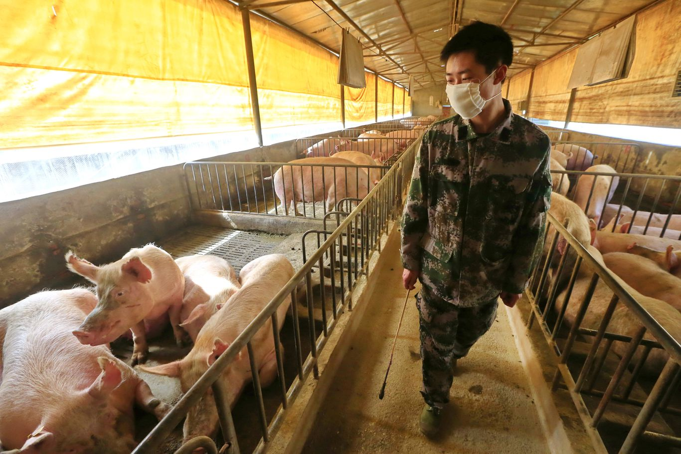 What we're watching: A swine flu menace emerges in China - Axios thumbnail