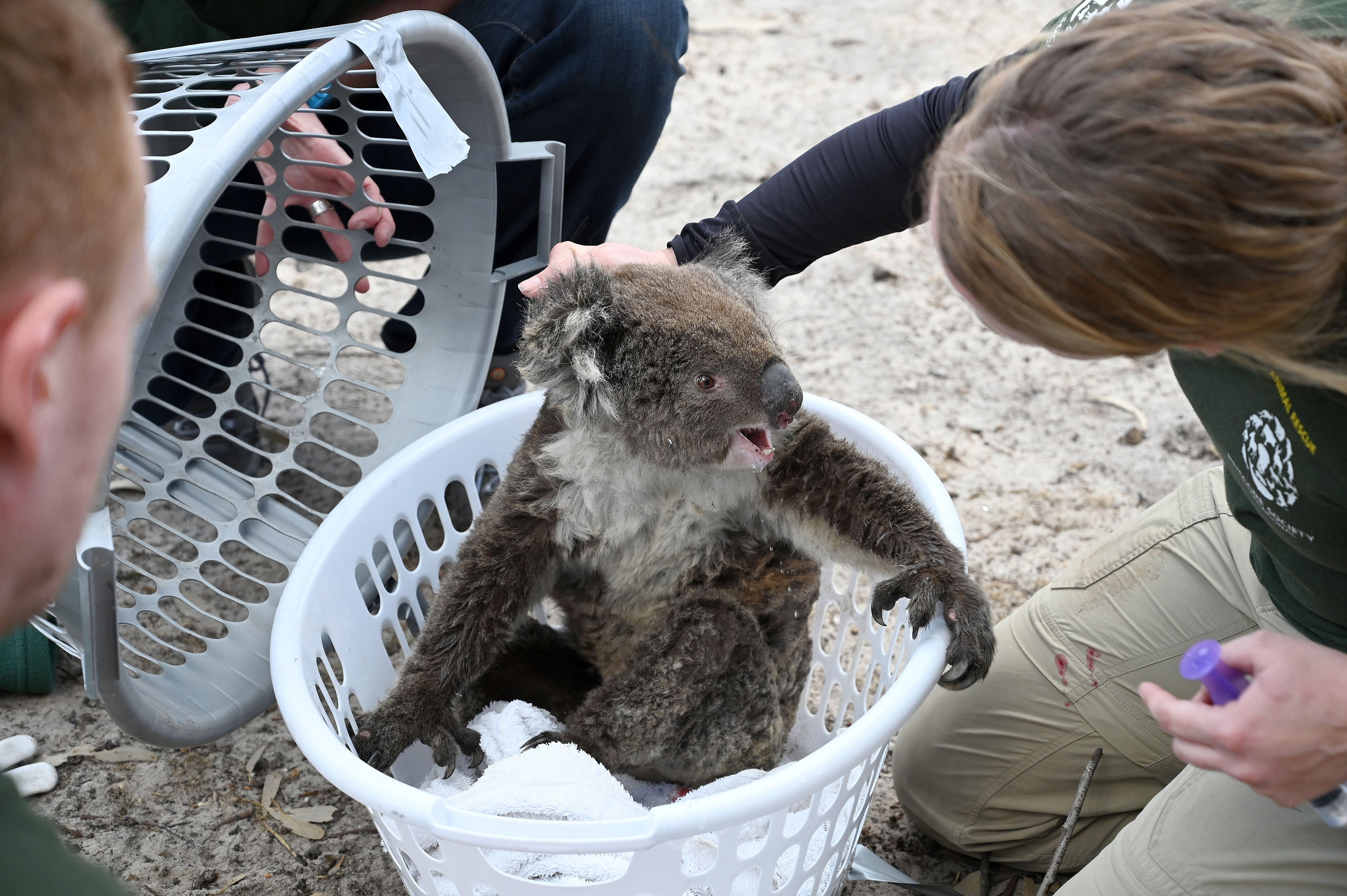 113 animal species need urgent help after Australia's bushfires - Axios
