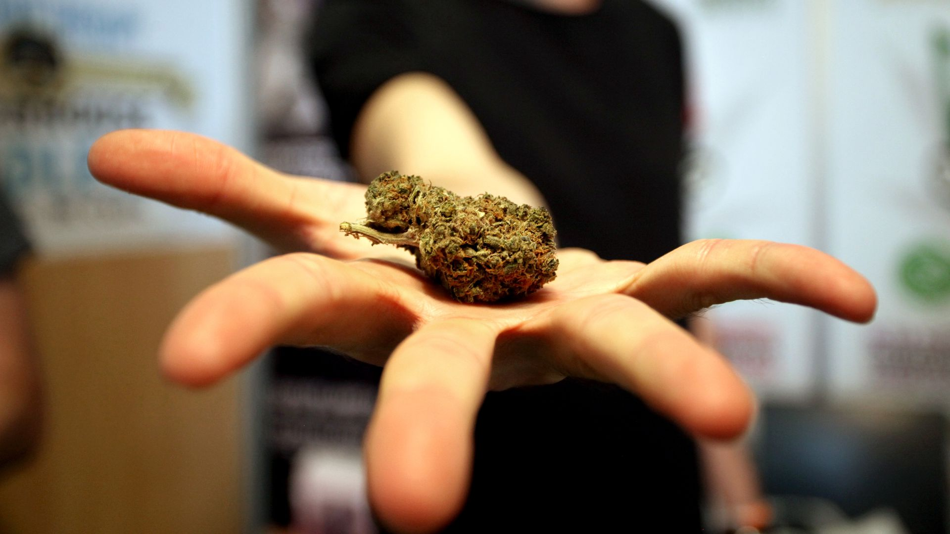 A man with an outstretched hand holding a nugget of marijuana.