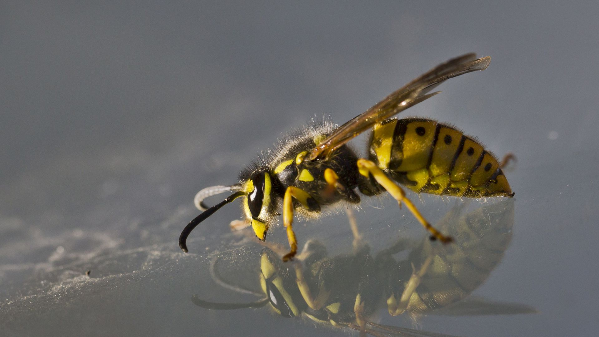 A yellow jacket