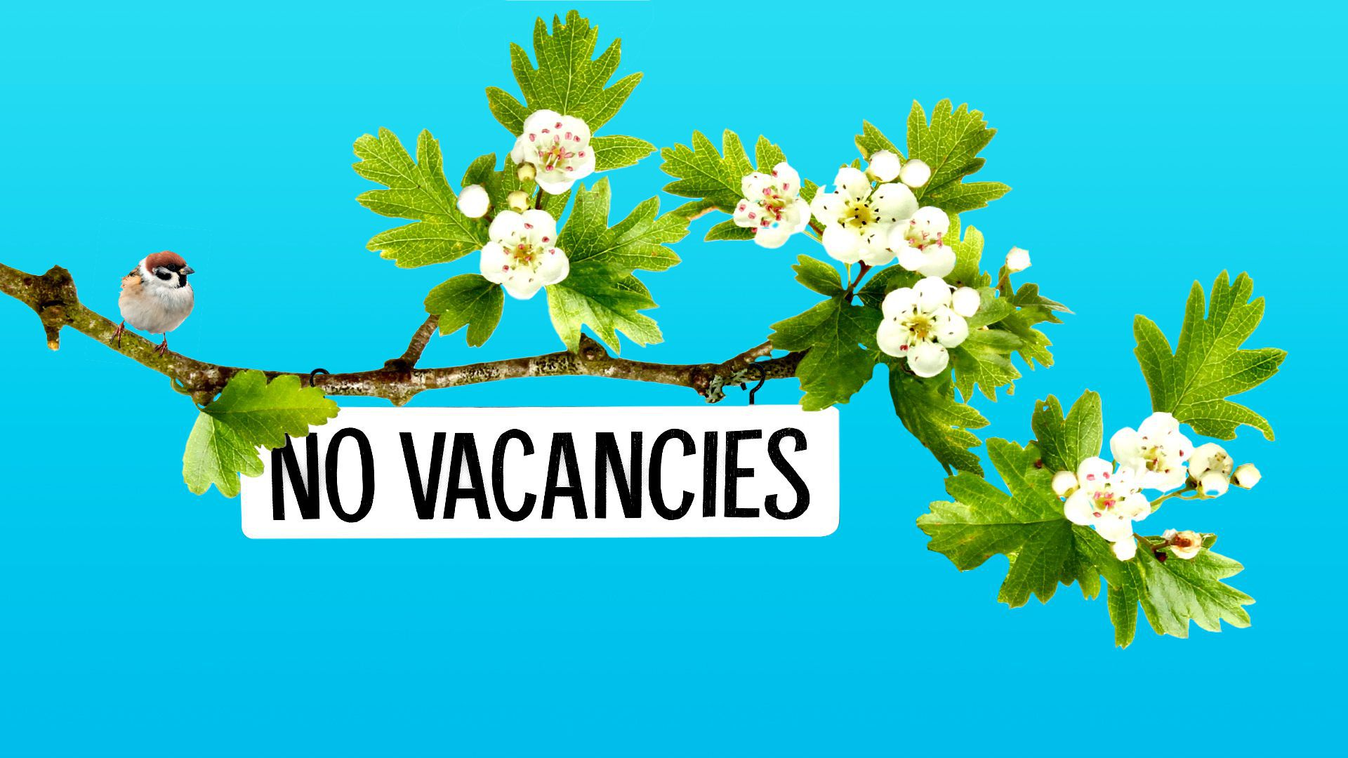 Illustration of a tree branch with a no vacancies sign hanging off of it.