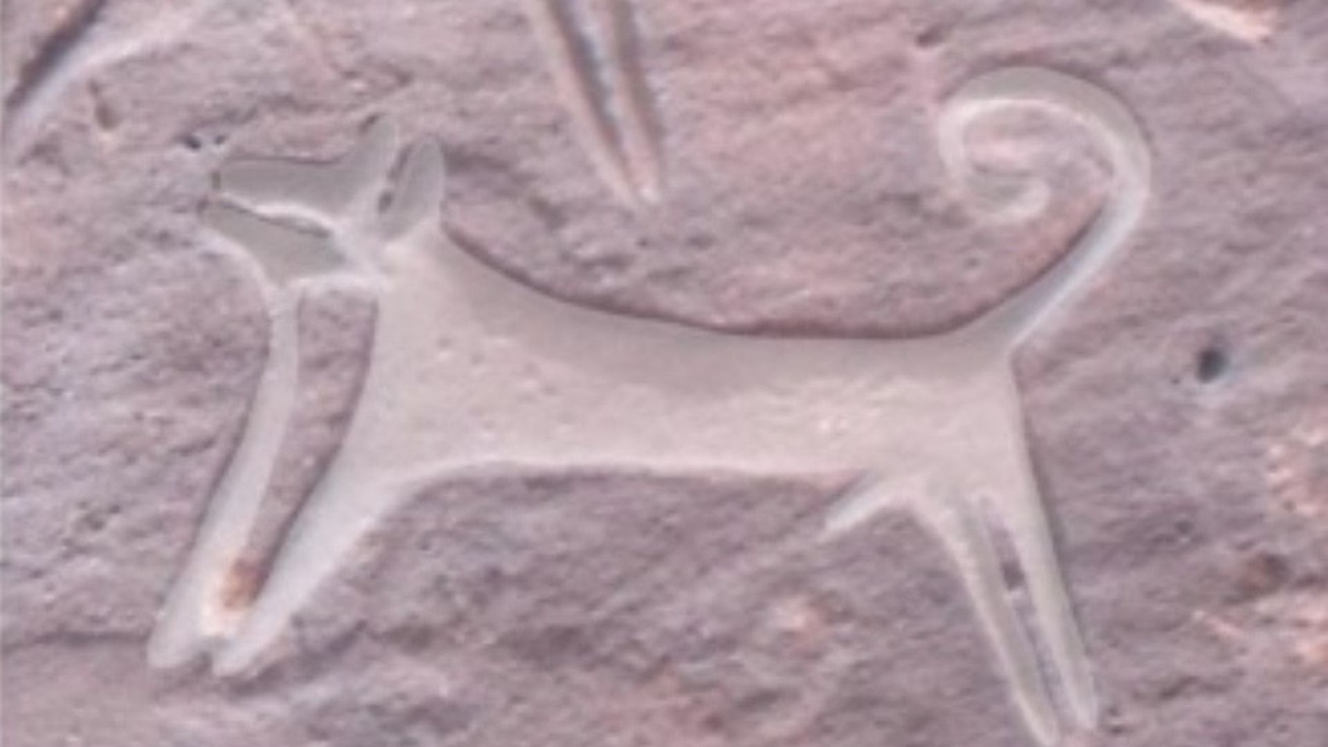 Ancient engravings depict dogs on leashes