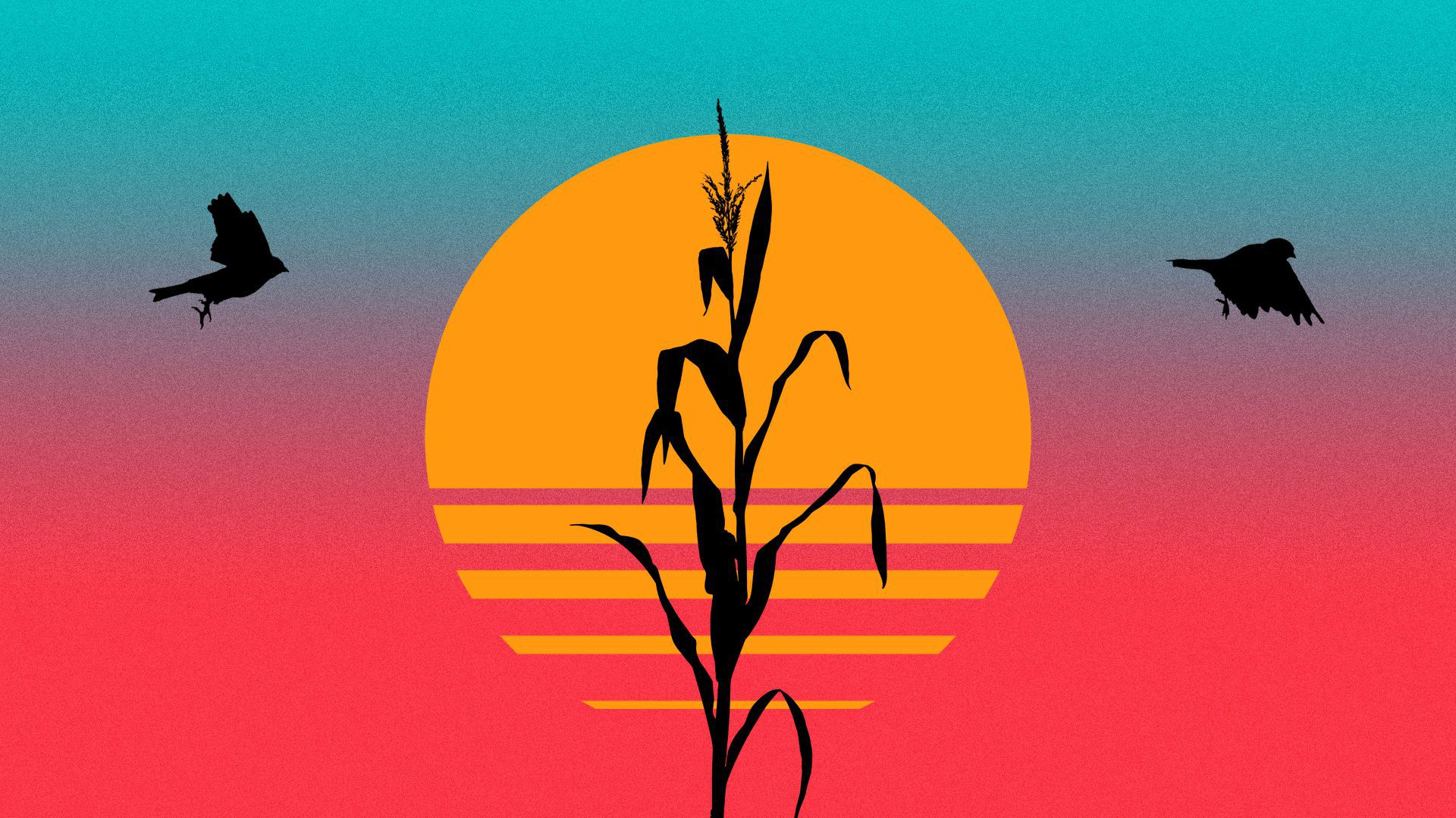 Illustration of a cornstalk and two goldfinches silhouetted against a sun and sky in neon colors.