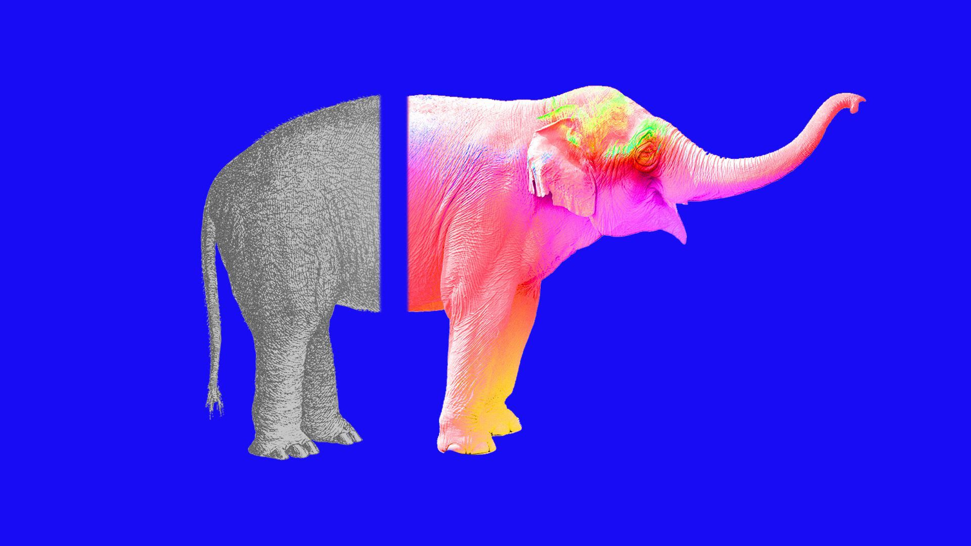 An illustration of a Republican elephant cut down the middle