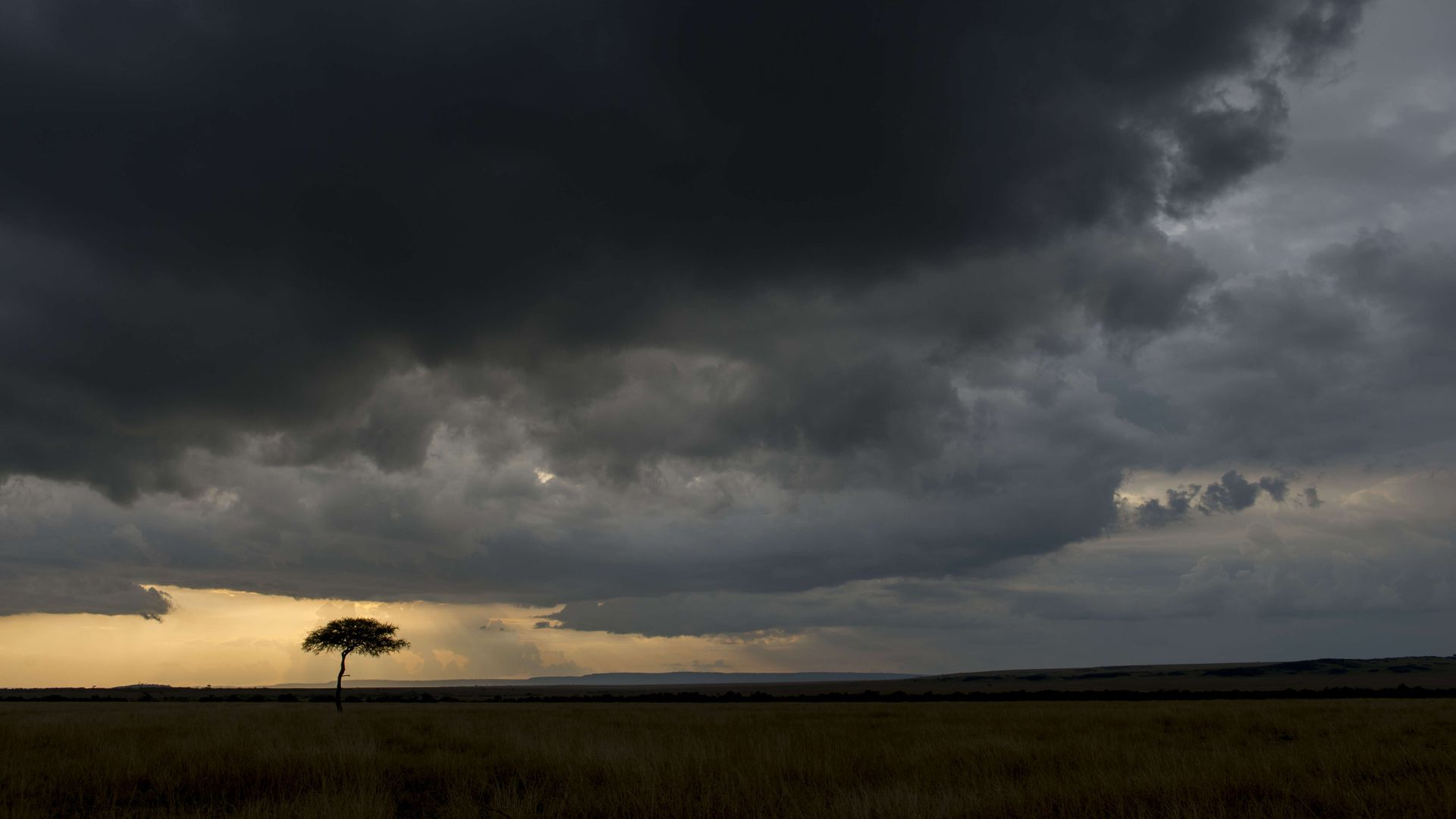 Dark storm clouds over a tree in the grasslands of Kenya