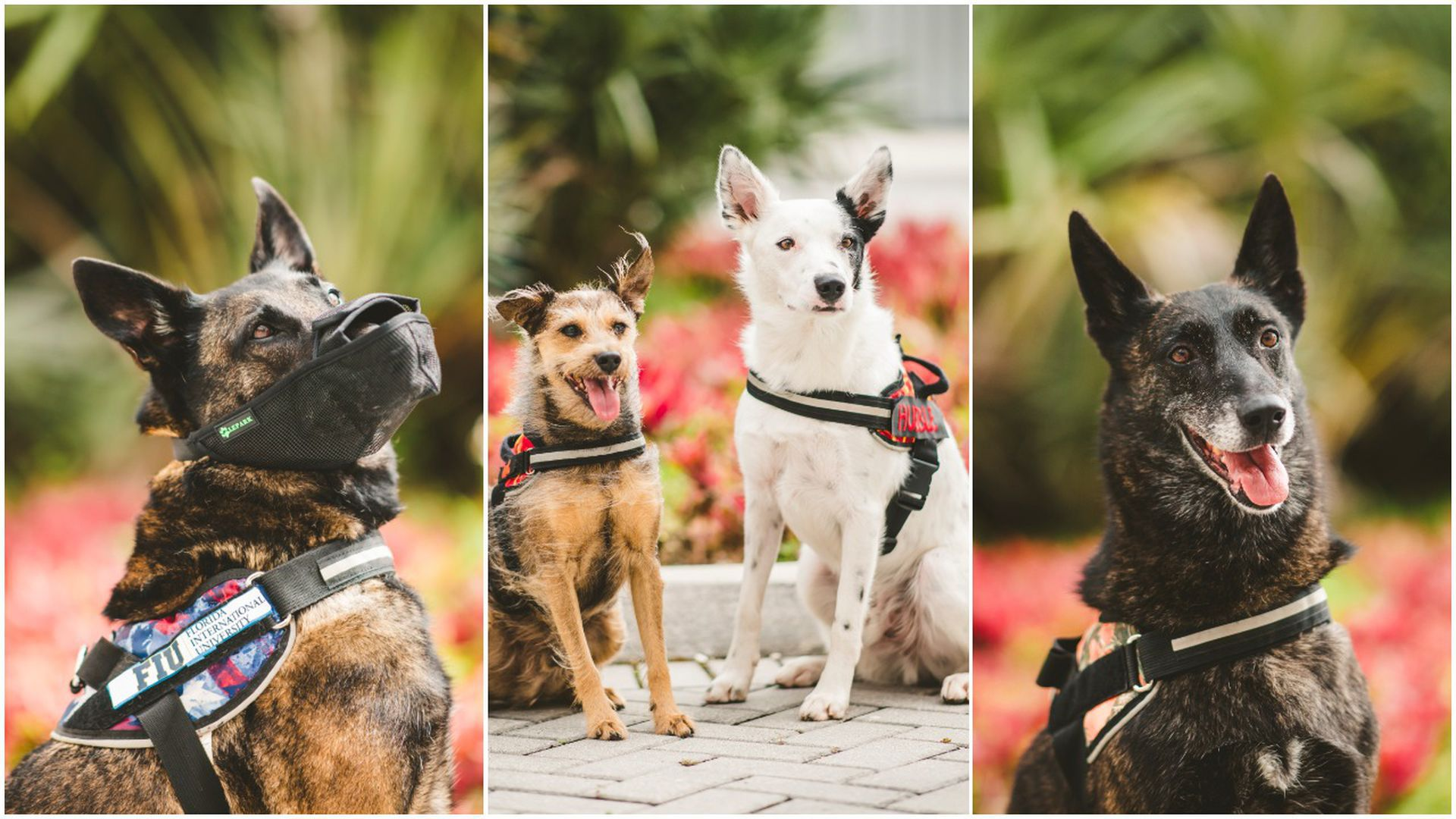 Collage picture of three pics of dogs