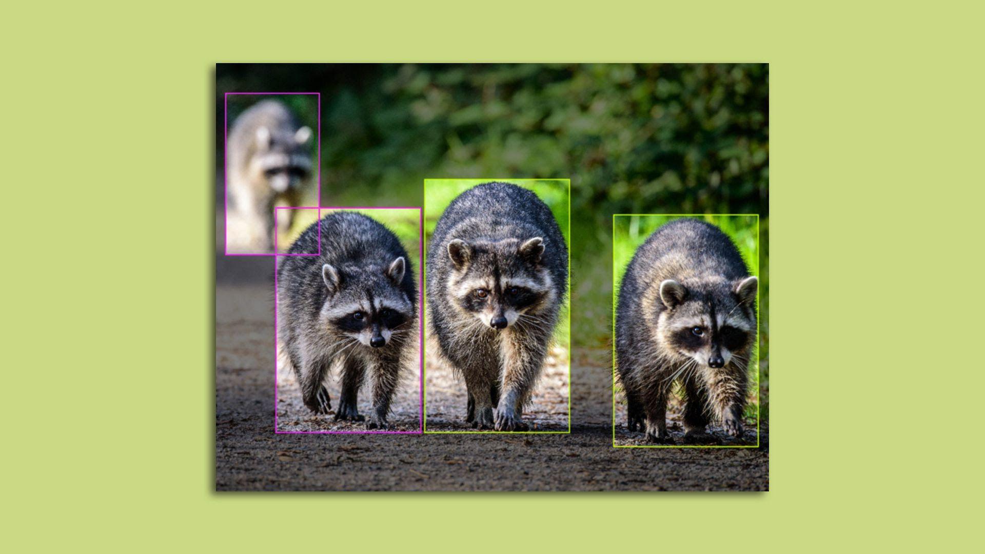 Computer vision technology tracks raccoons.
