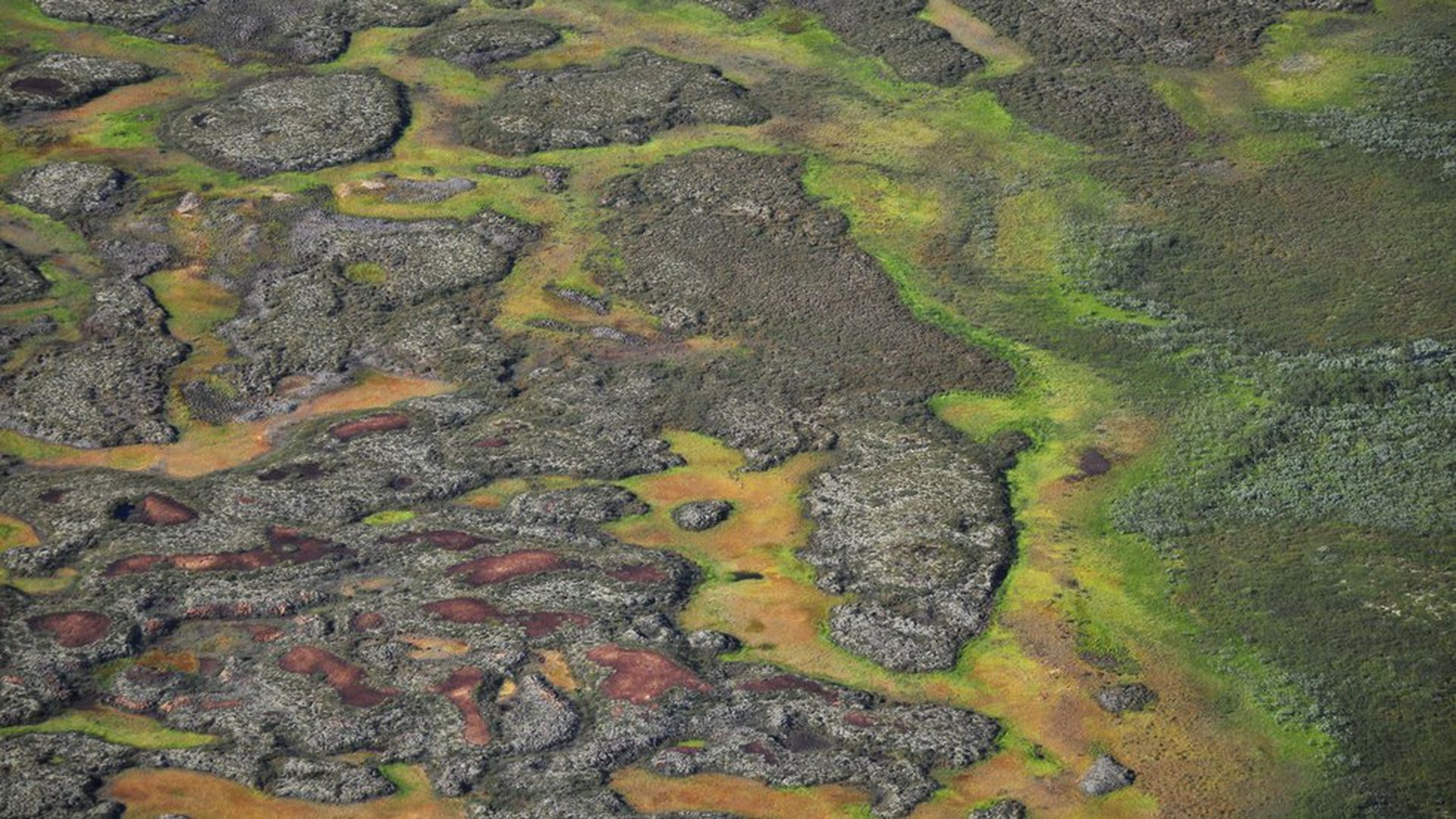Thawing Arctic peatlands could release potent greenhouse gas
