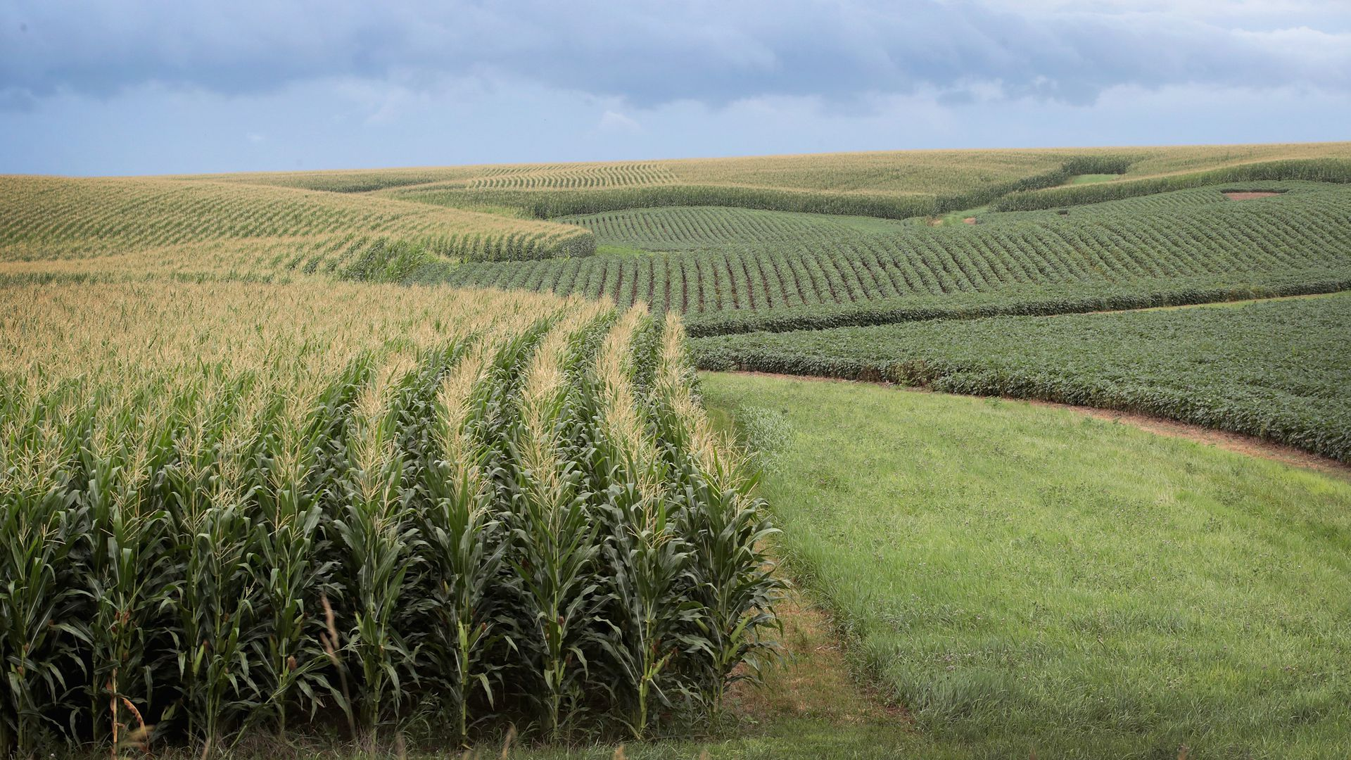 A photo of a crop field