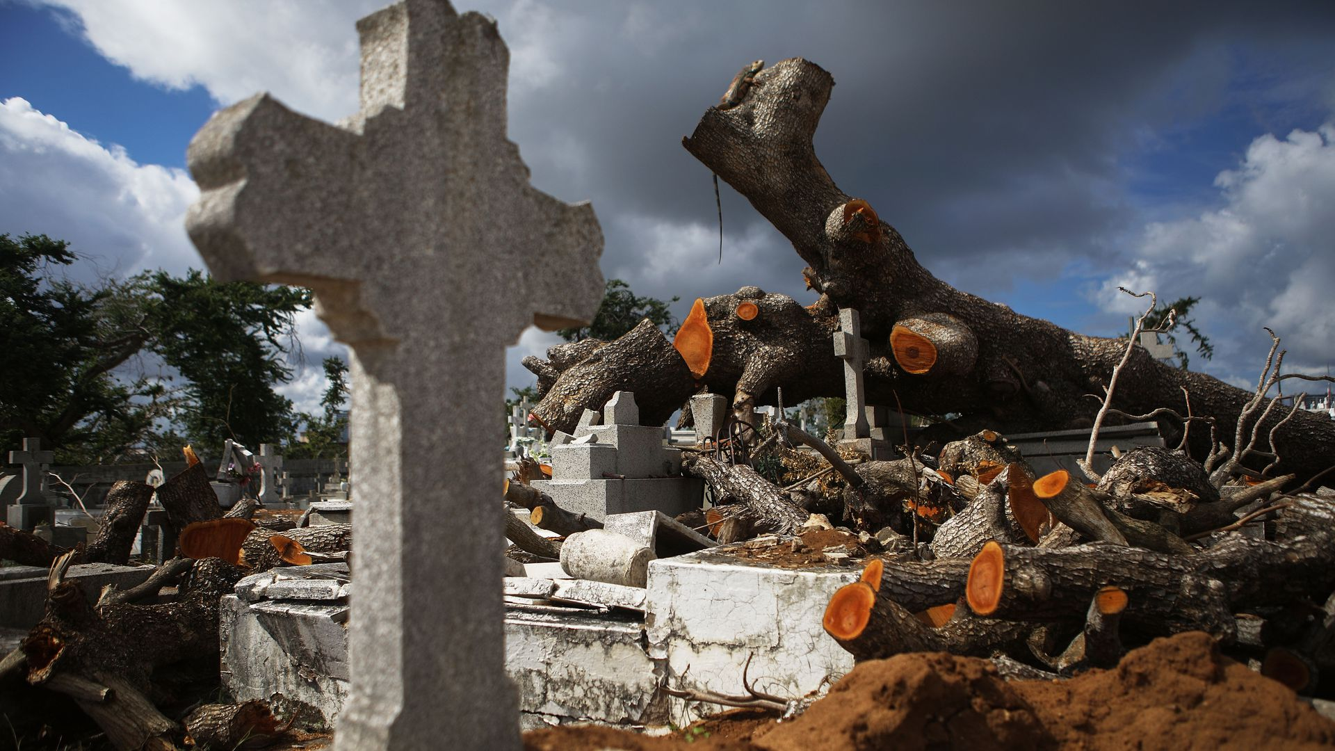 A tree toppled by Hurricane Maria lays next to a grave.
