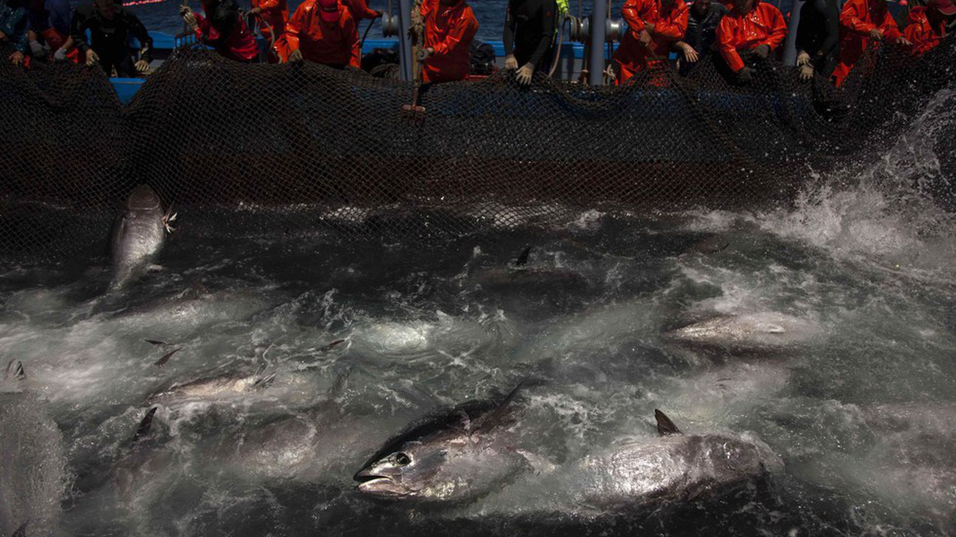 why fish are difficult to conserve Ocean resources marine conservation home / next: sustainable ecotourism » the ocean is one of earth's most valuable natural resources it provides food in the form of fish and shellfish—about 200 billion pounds are caught each year.