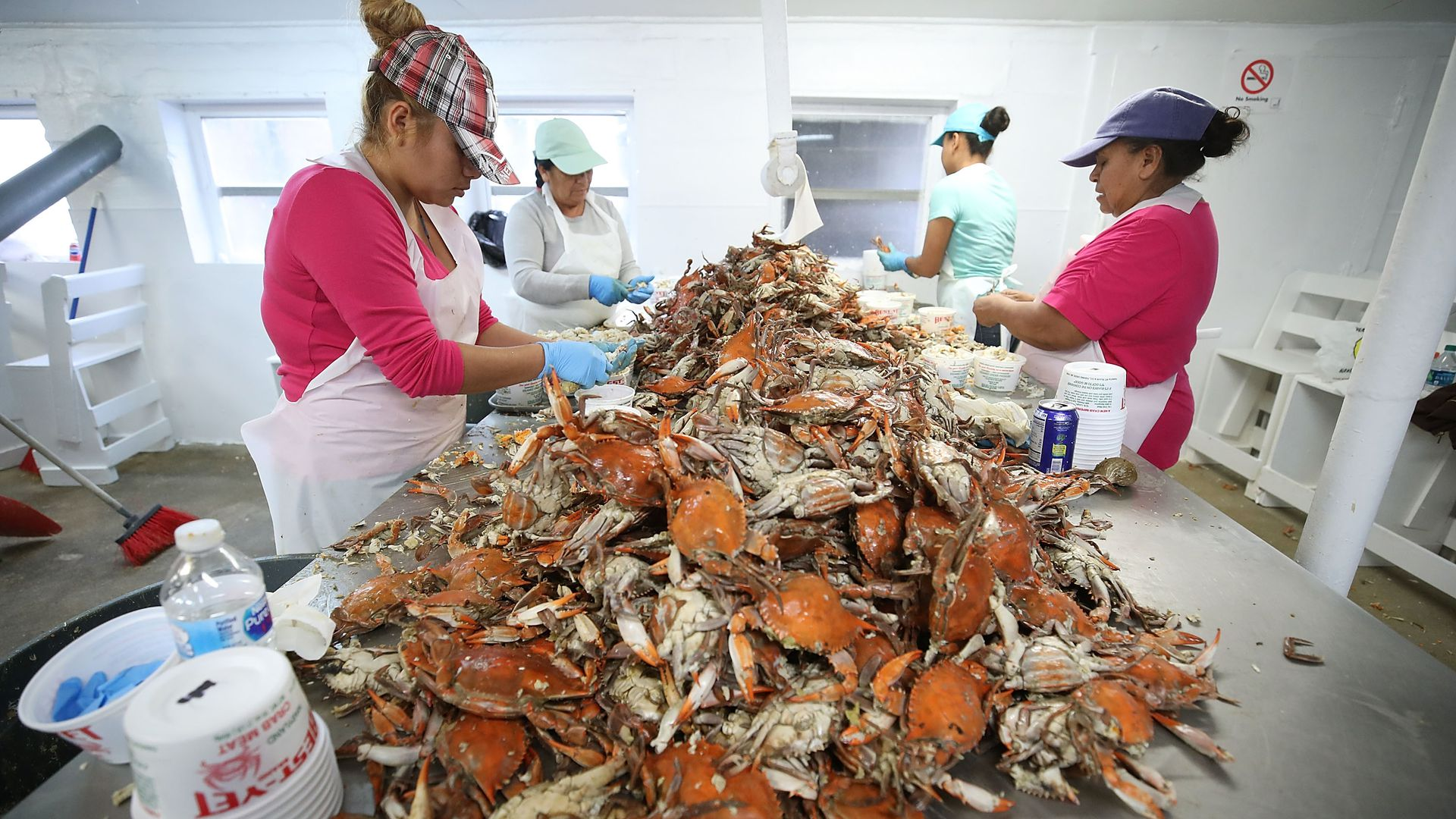 Pickers at the W.T. Ruark Seafood Co., in Hoopers Island, Maryland. Photo: Mark Wilson/Getty Images