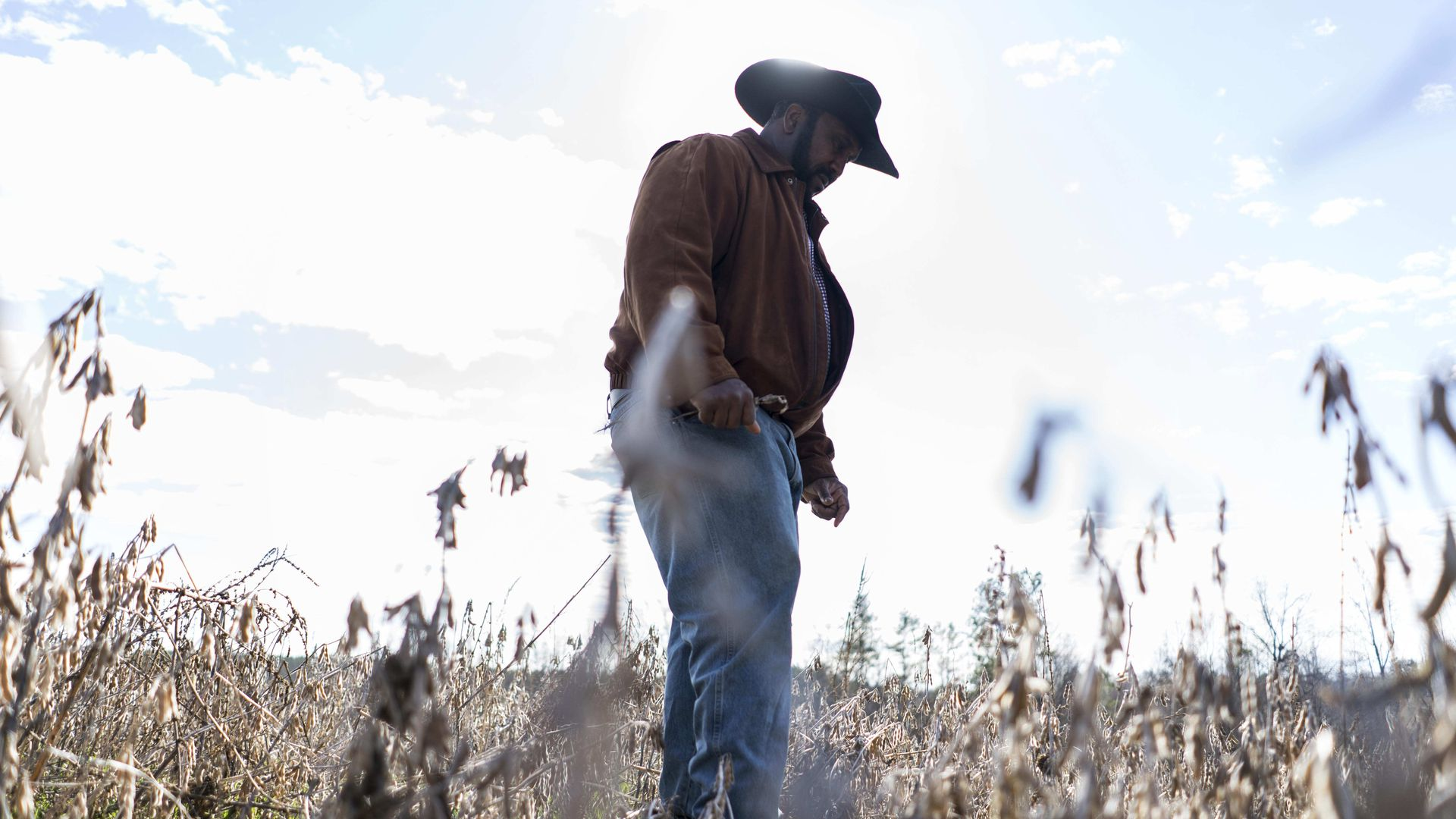 In this image, a man in a cowboy hat stands in a soybean field.