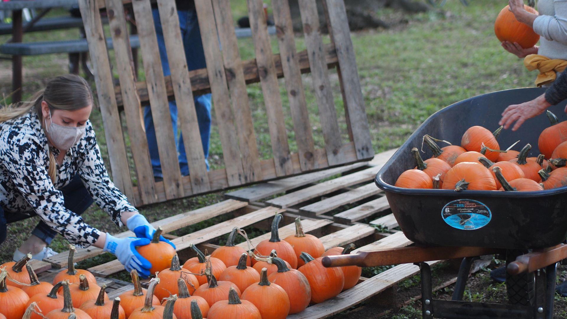 Volunteers prep pumpkins at an Austin pumpkin patch.