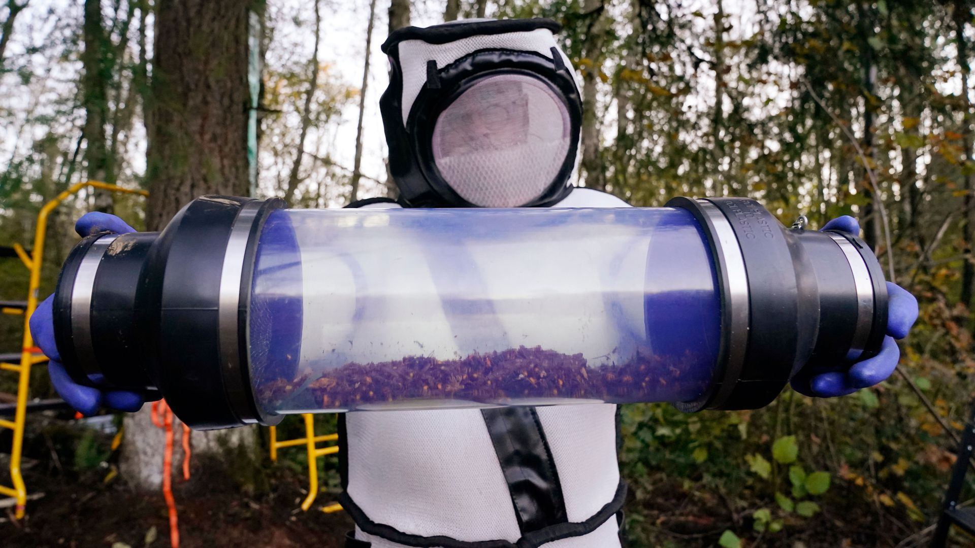 A scientist displays a canister of Asian giant hornets vacuumed from a nest in a tree behind him on October 24, 2020, in Blaine, Washington.