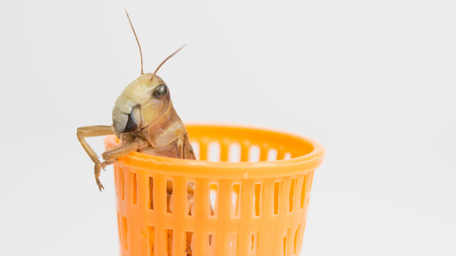 Cricket in a wastebasket