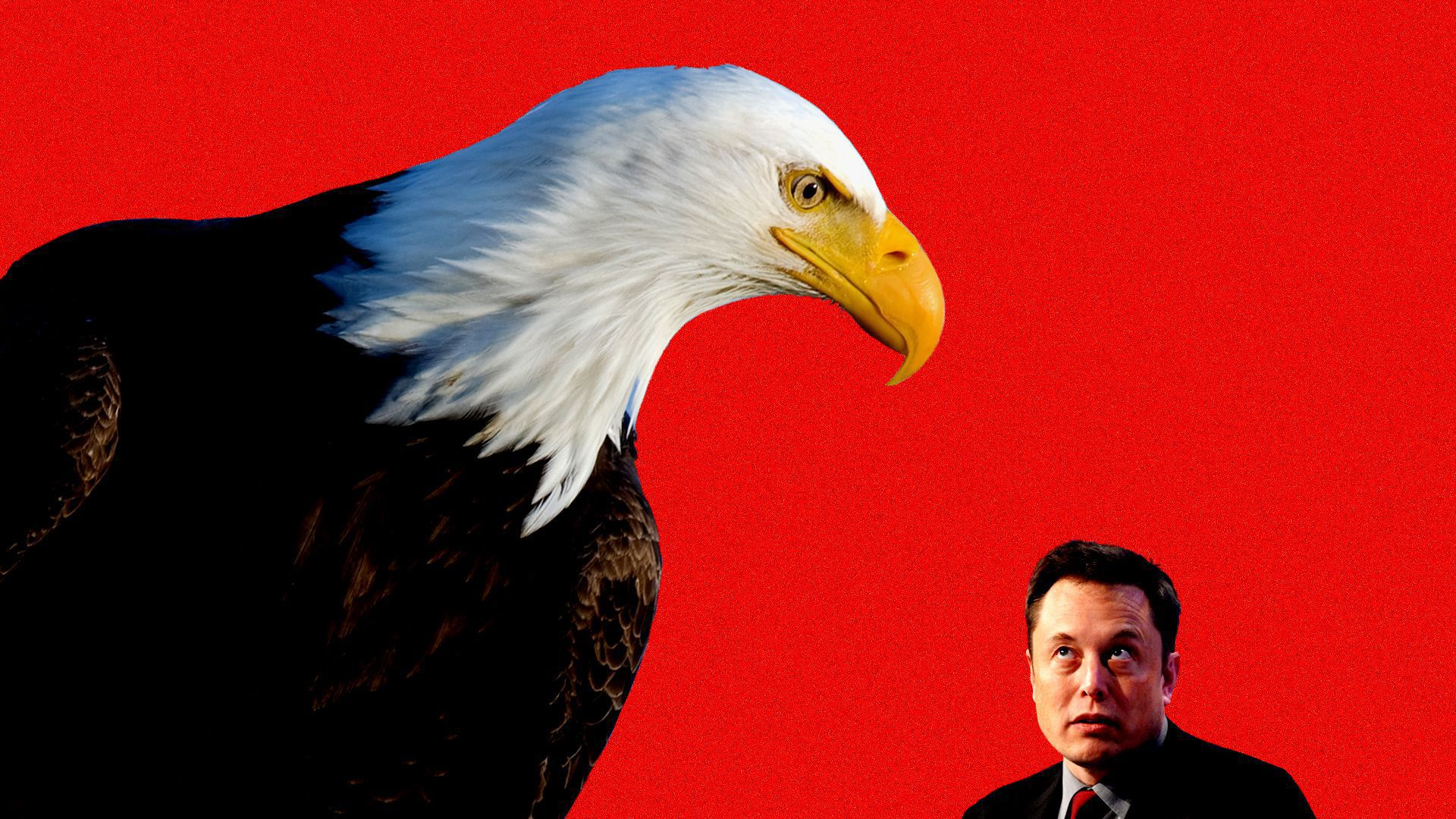 In this illustration, a giant bald eagle stands over Tesla CEO Elon Musk in front of a red background.