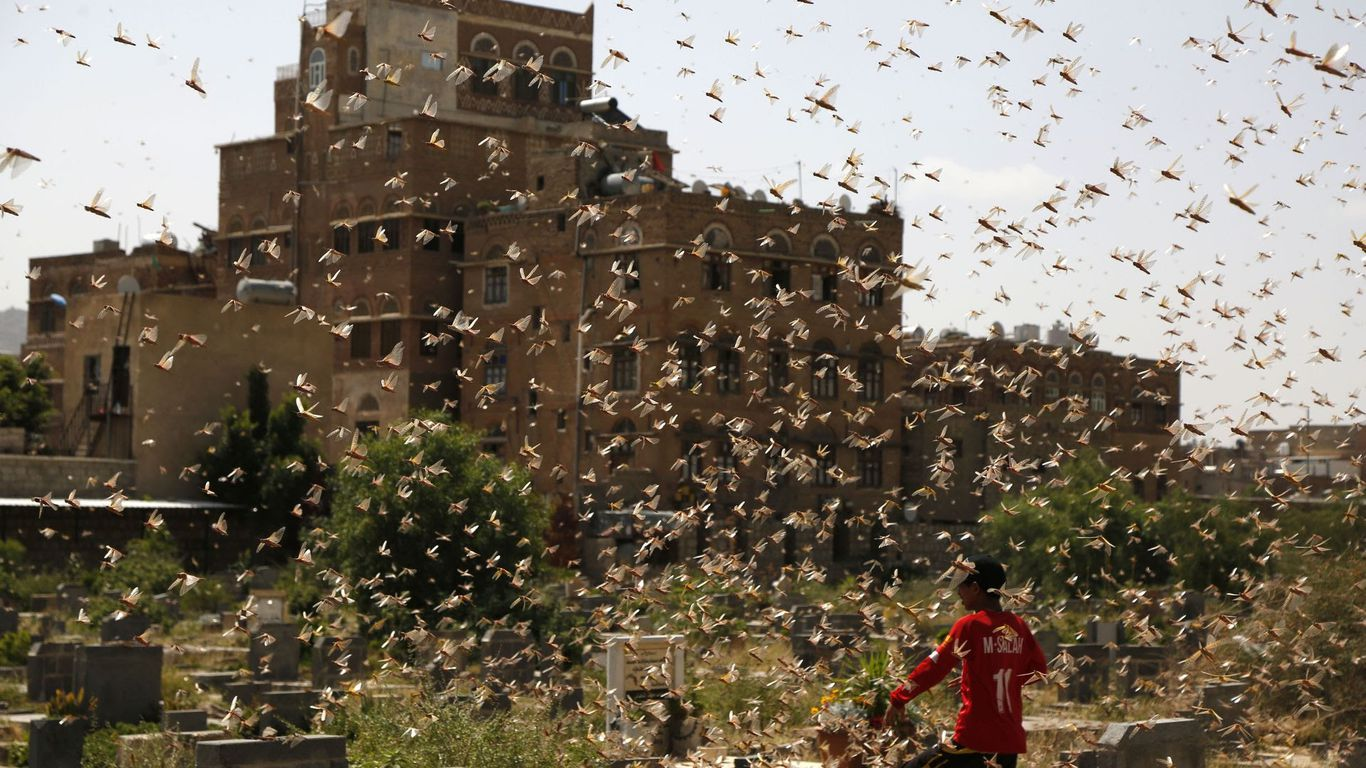 Massive locust plague poised to cut multiple countries ...