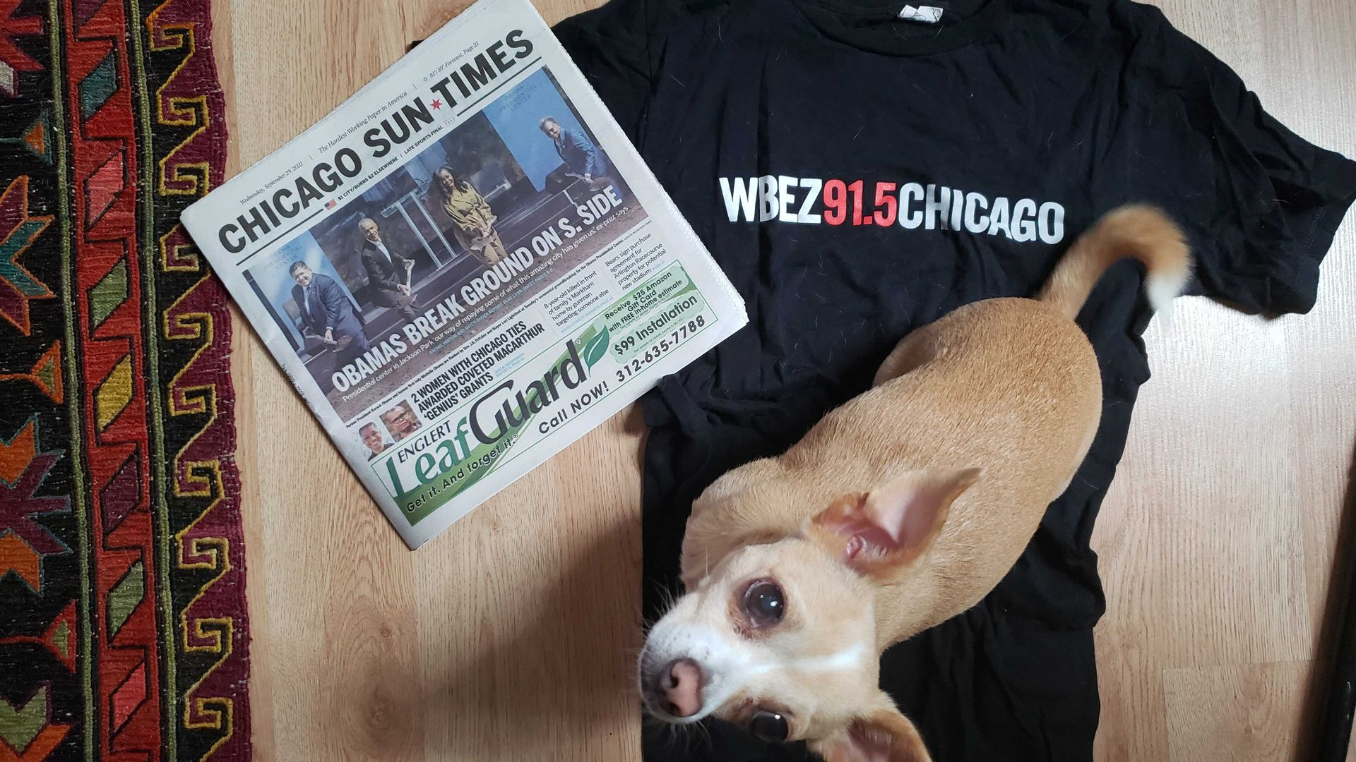 Dog standing on a WBEZ t-shirt and next to a newspaper.