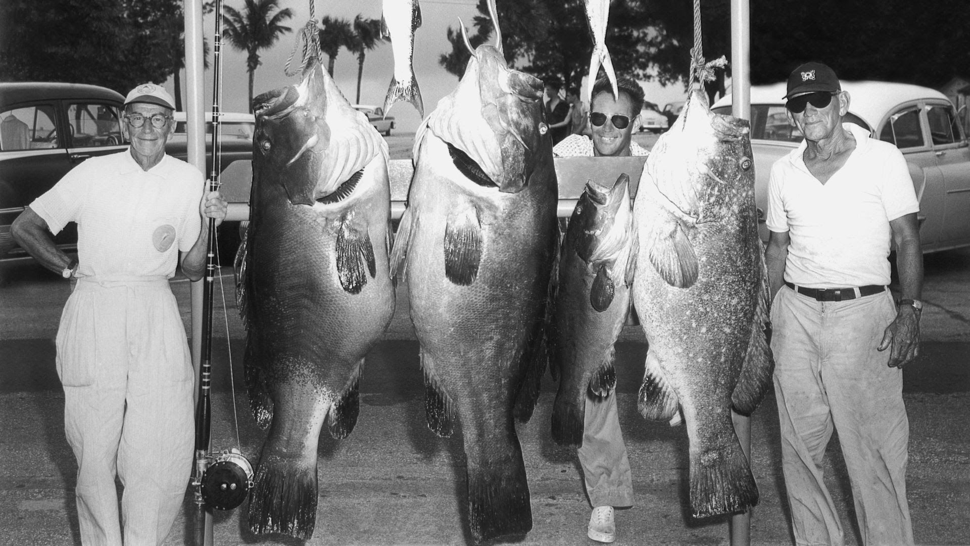 Captain Jack Weygant (right) poses with two men and three goliath grouper caught near Fort Lauderdale, circa 1960.