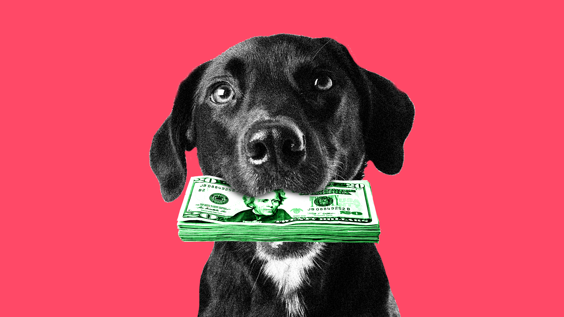 Dog with money in his mouth
