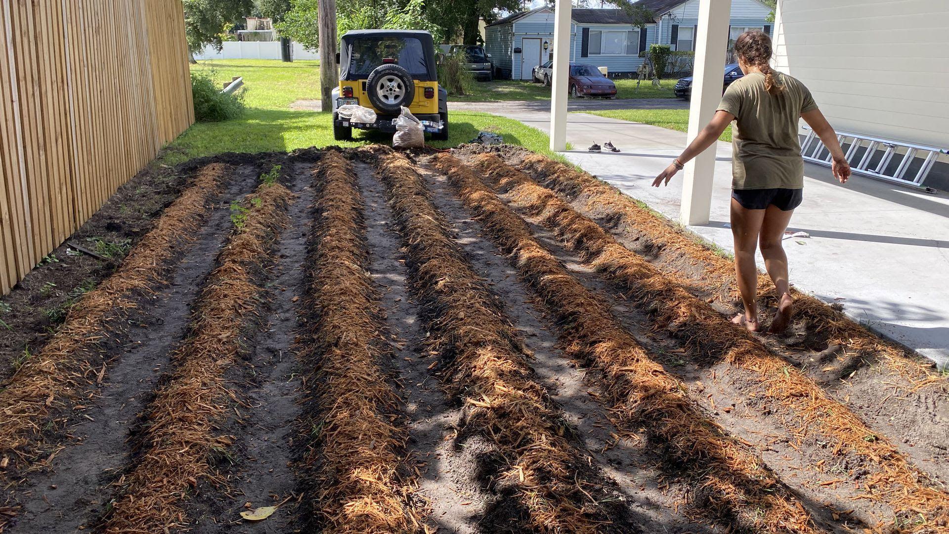 A row of fertilized seedlings in Ben's garden in Seminole Heights.