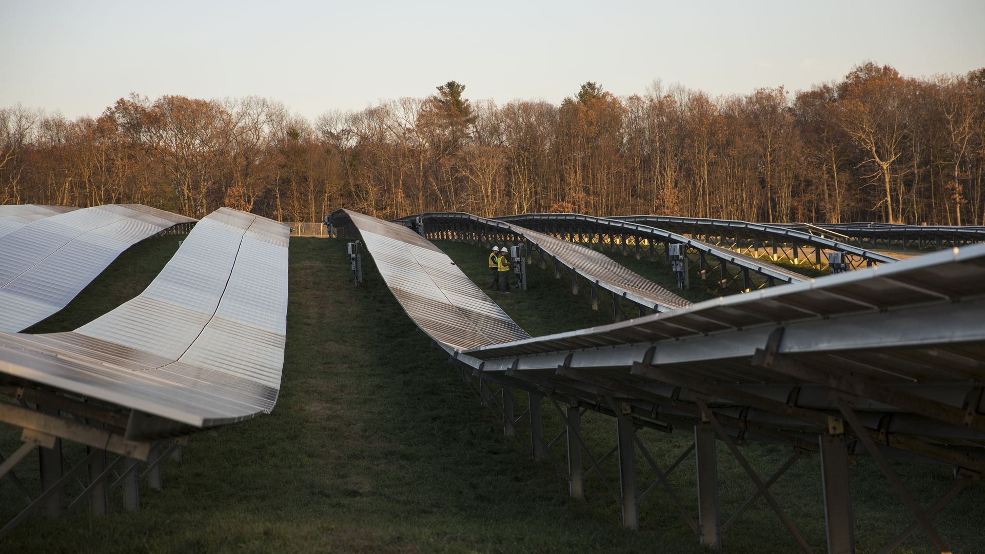 solar panels in field in front of forest