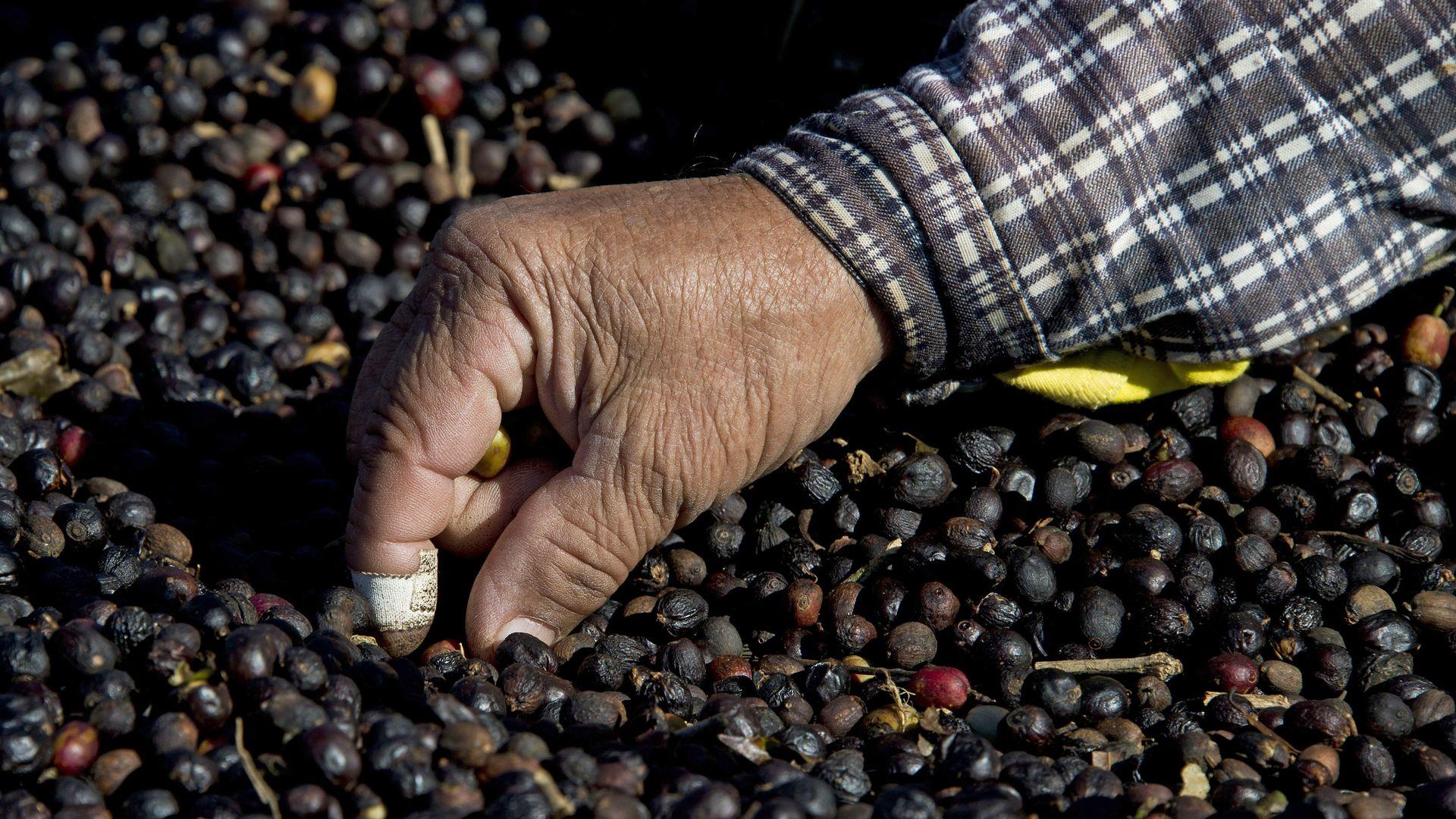 Coffee edges toward a bear market