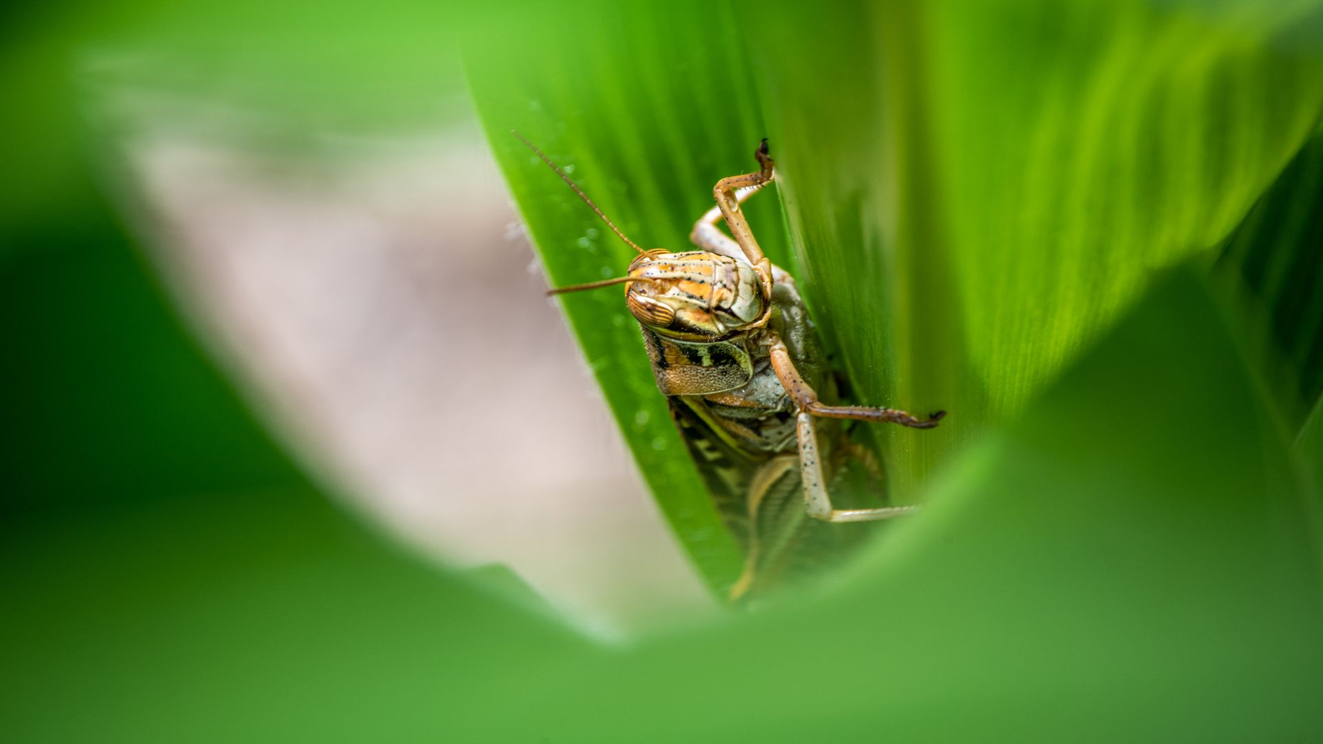 Picture taken up-close of a grasshopper