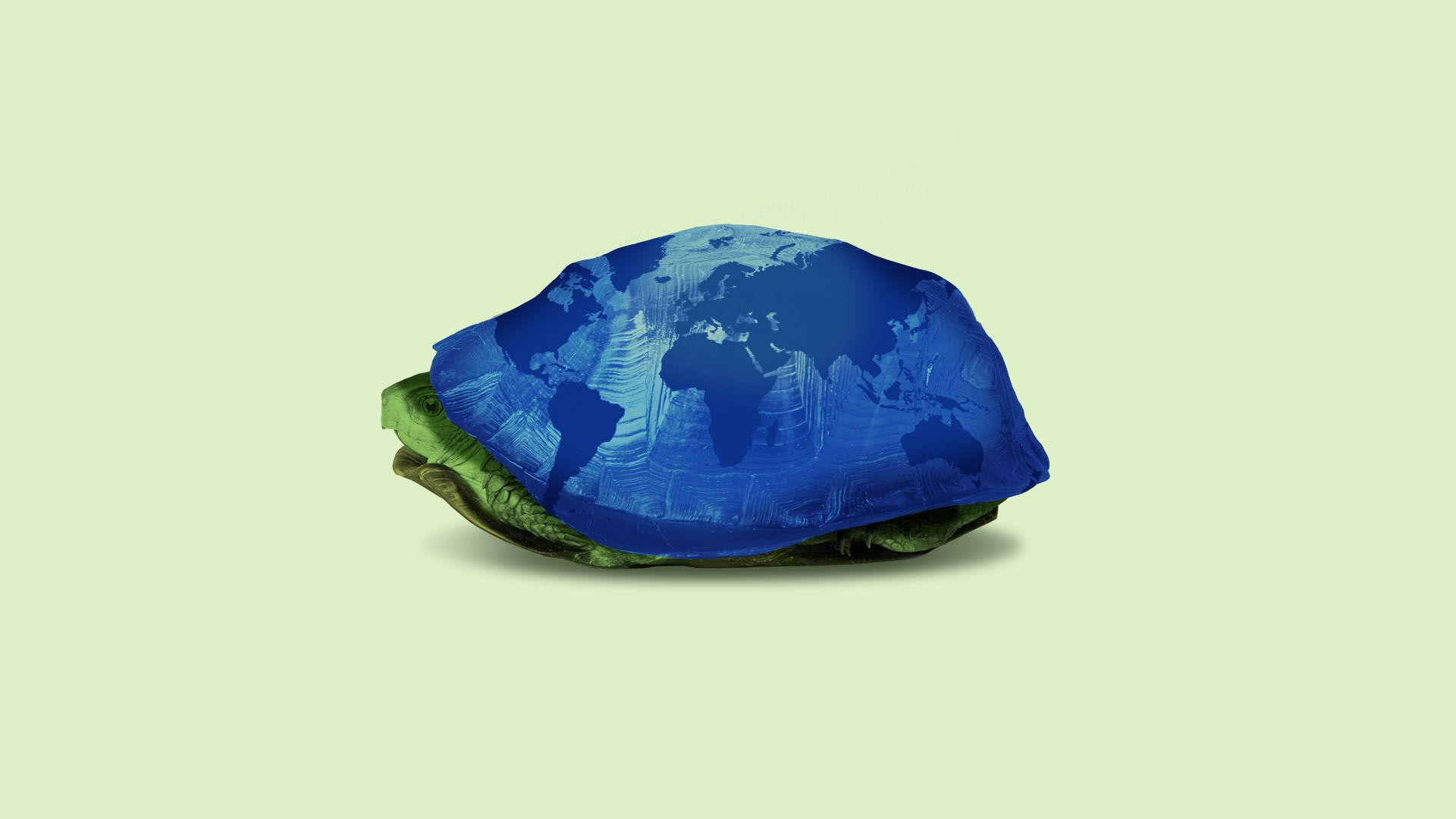 Illustration of a turtle with a globe design hiding in it's shell