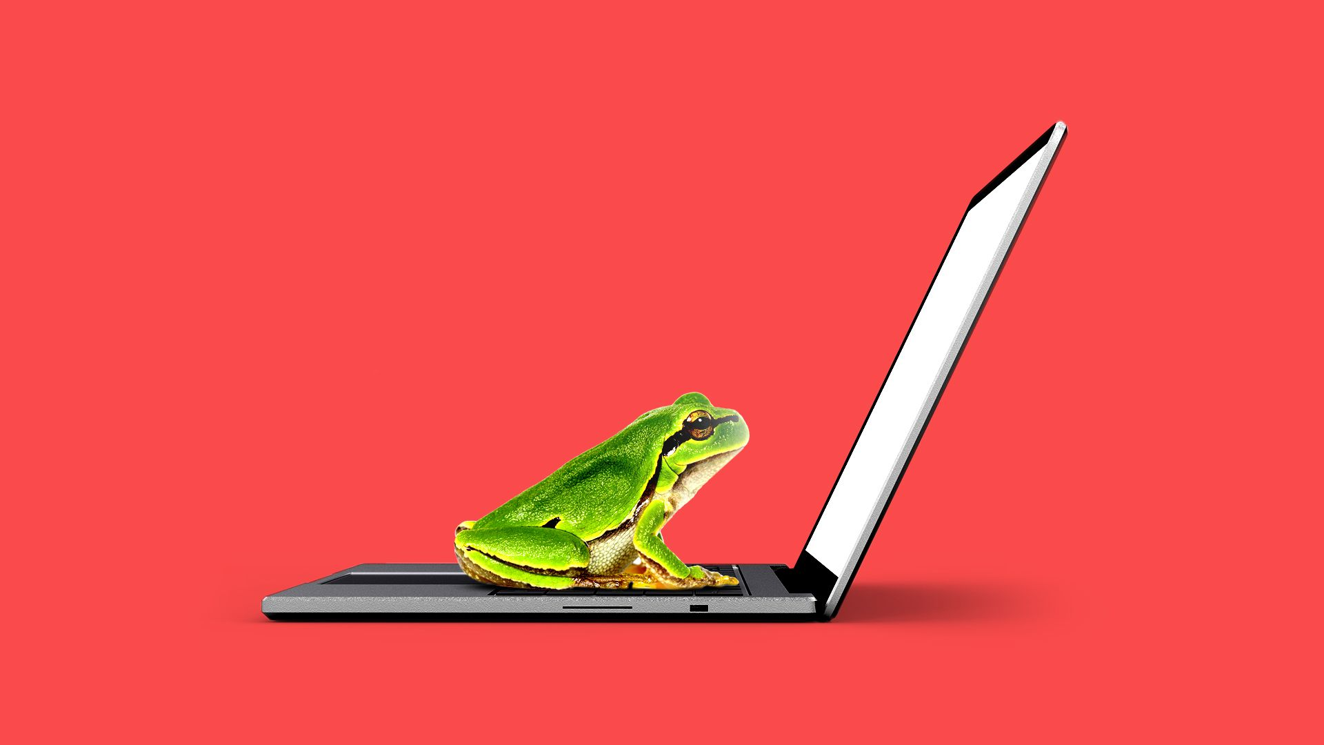 Illustration of a frog on a laptop