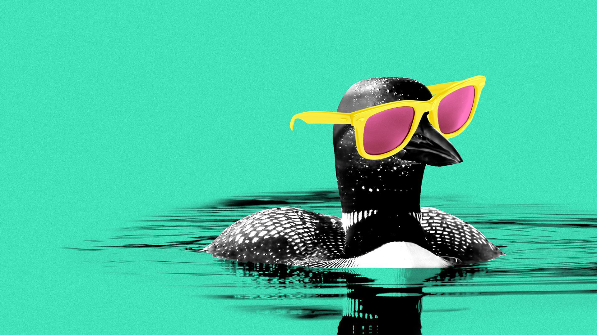 Illustration of a loon wearing sunglasses.