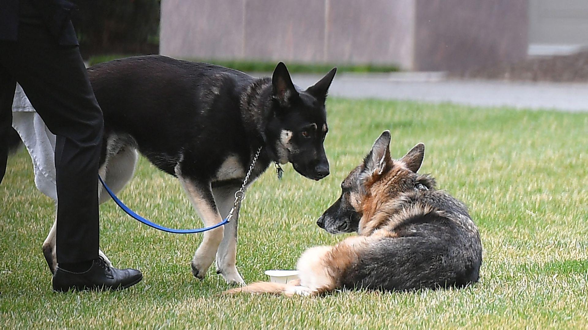 Biden family dog, Champ, has passed away - Axios