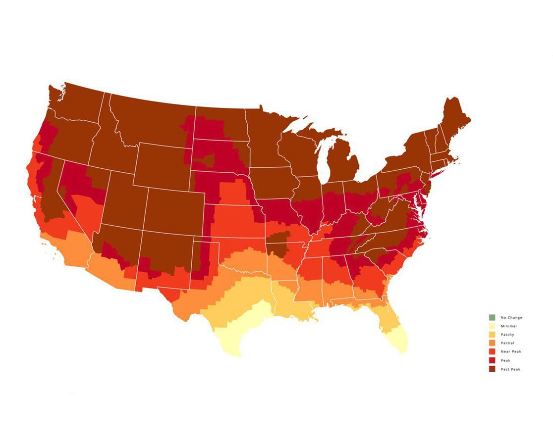 A map showing the fall foliage forecast across the U.S. for Oct. 25.