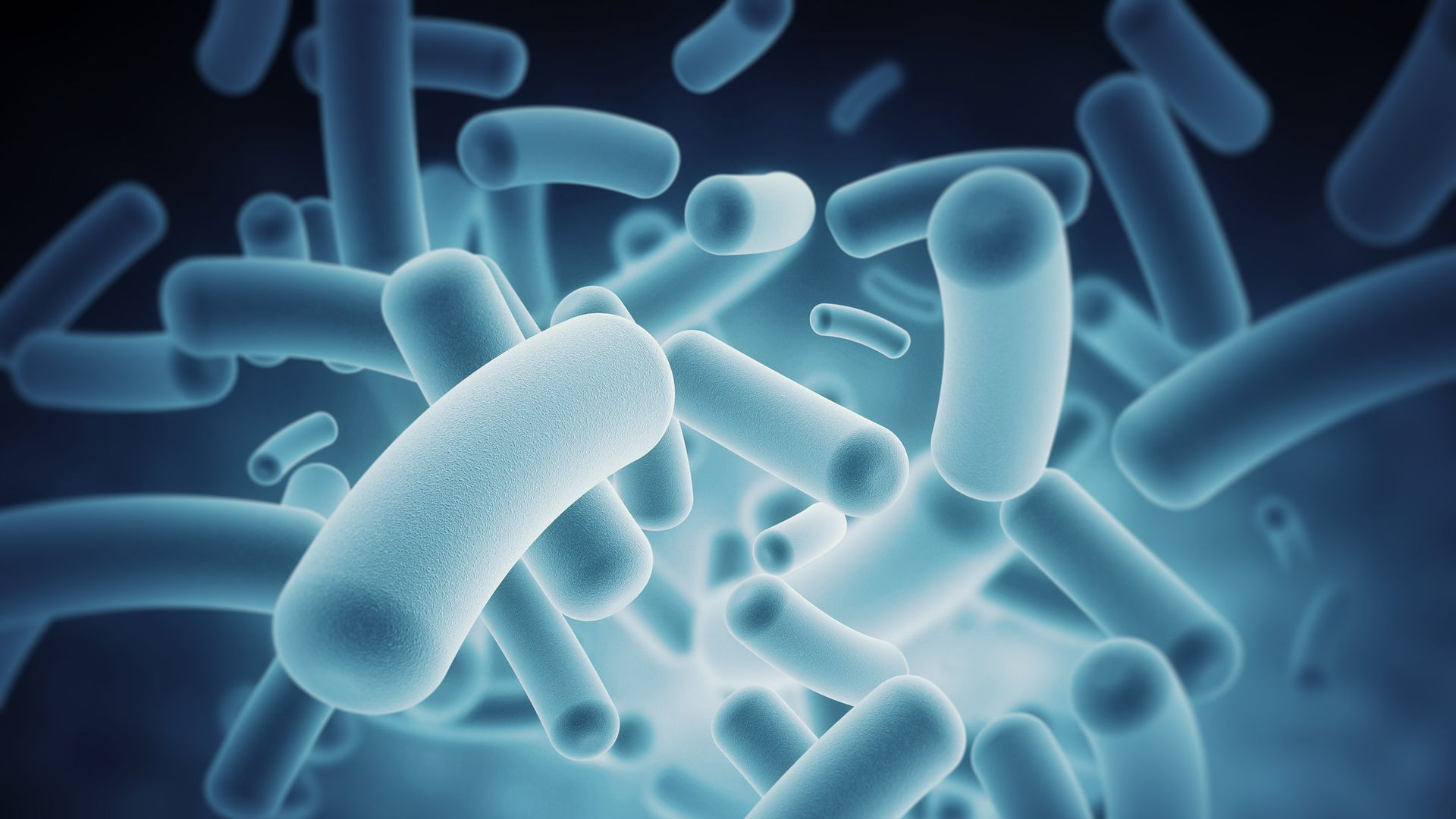 Photo of gut microbes from IBM