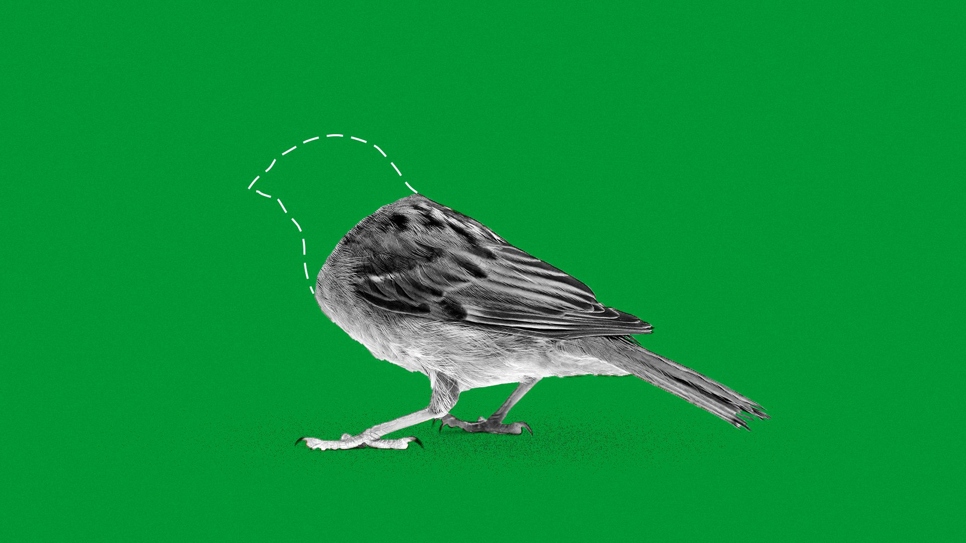 Illustration of vanishing bird