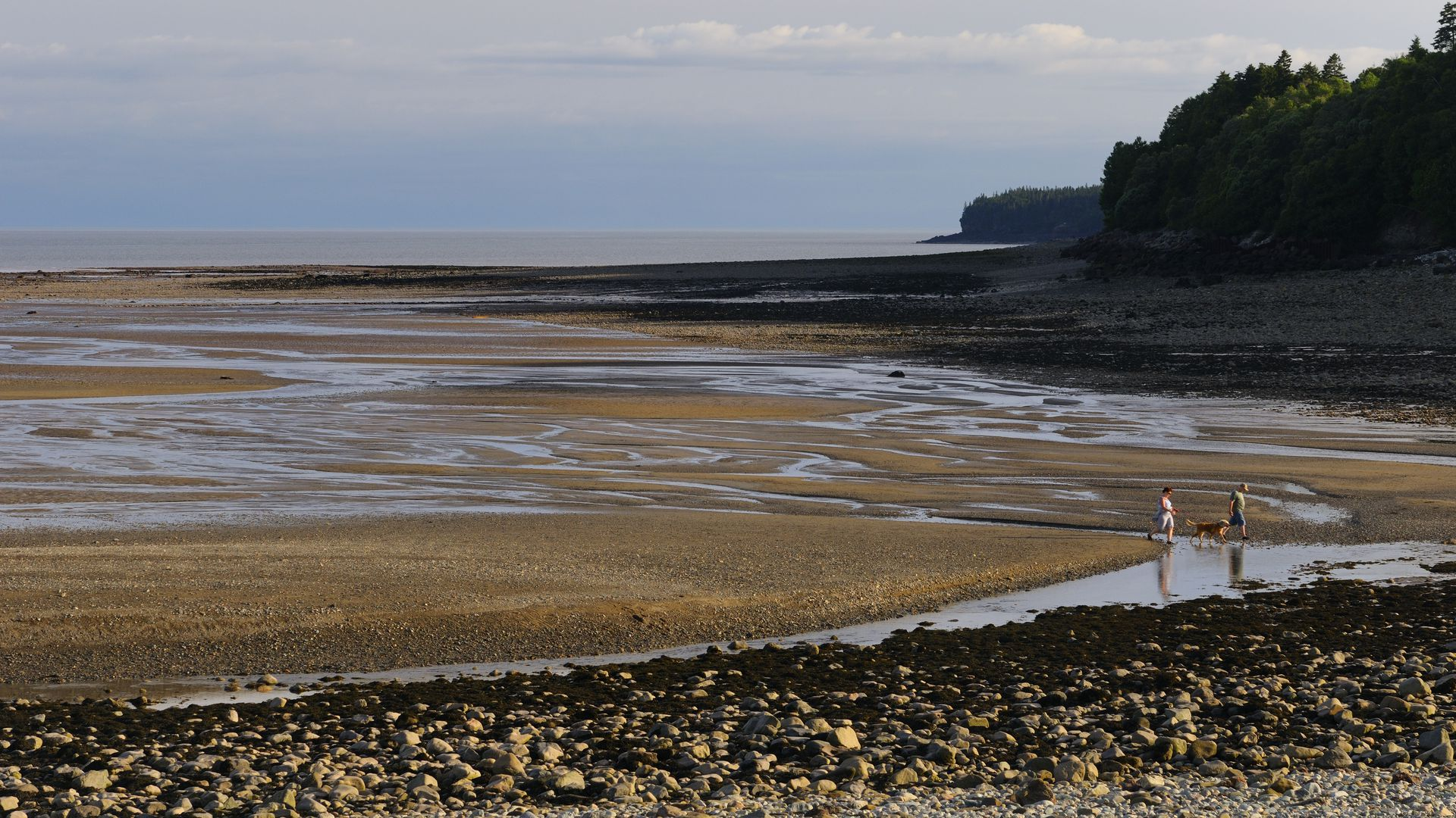 Couple with dog coming in with tide on the Bay of Fundy shores at Alma New Brunswick.
