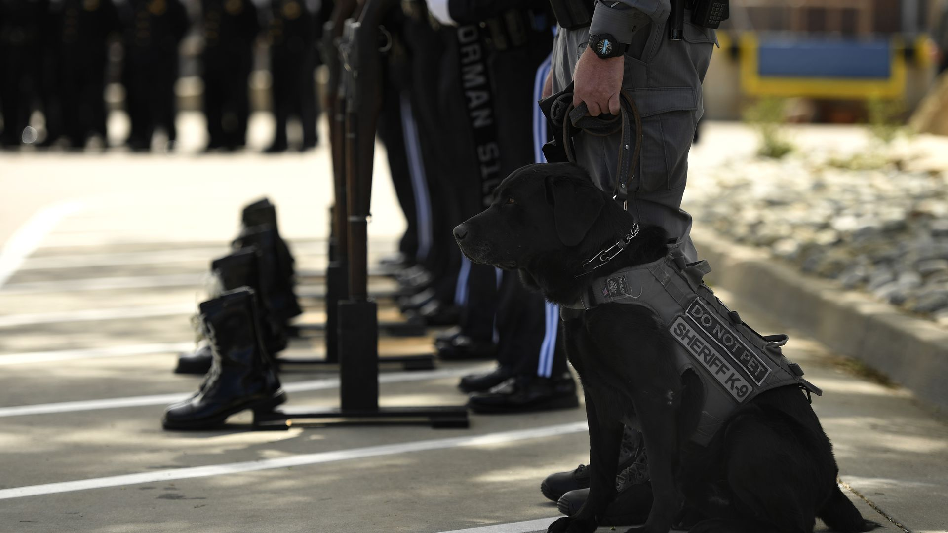 A drug dog sits next to his handler.