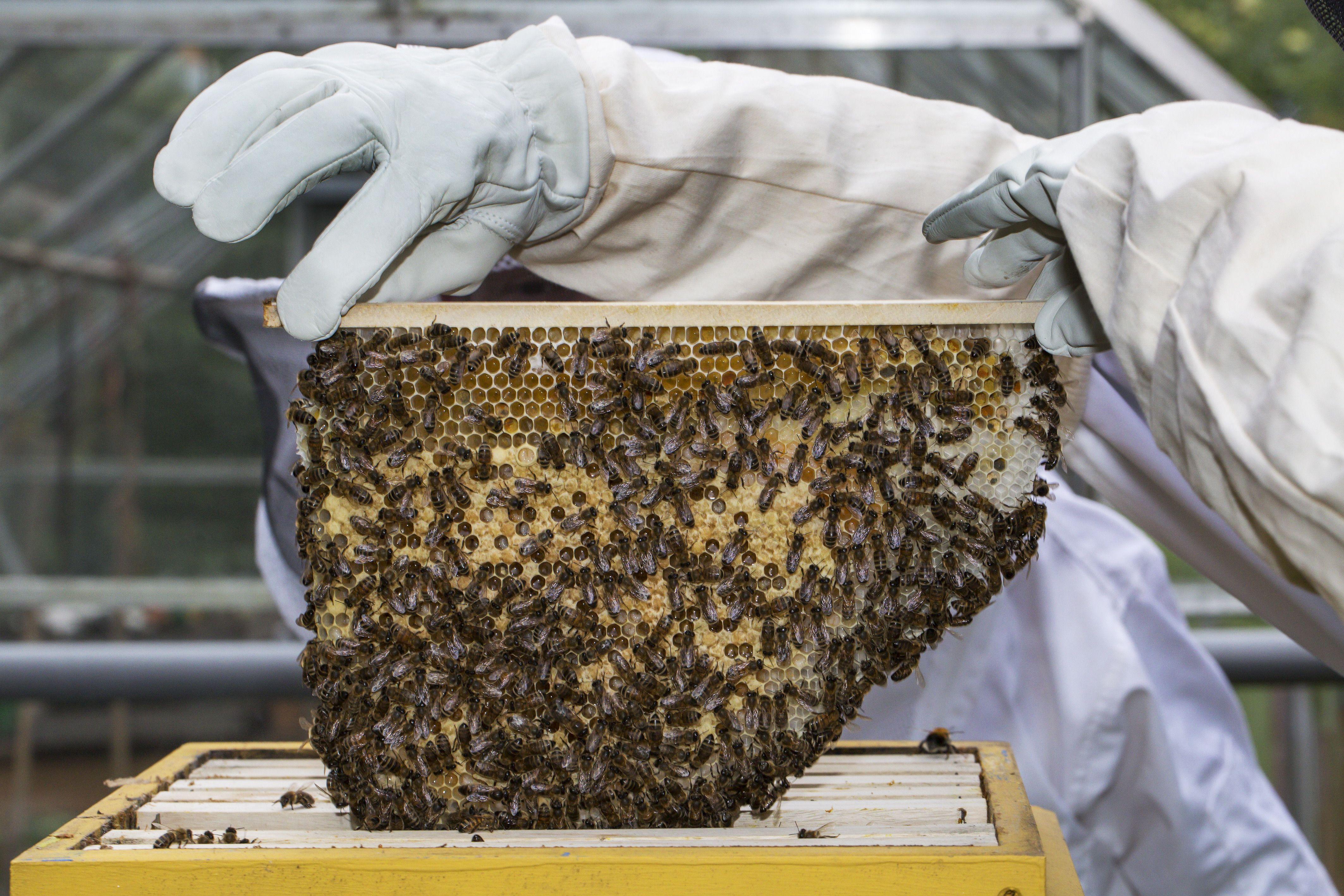 USDA suspends honeybee colony research - Axios