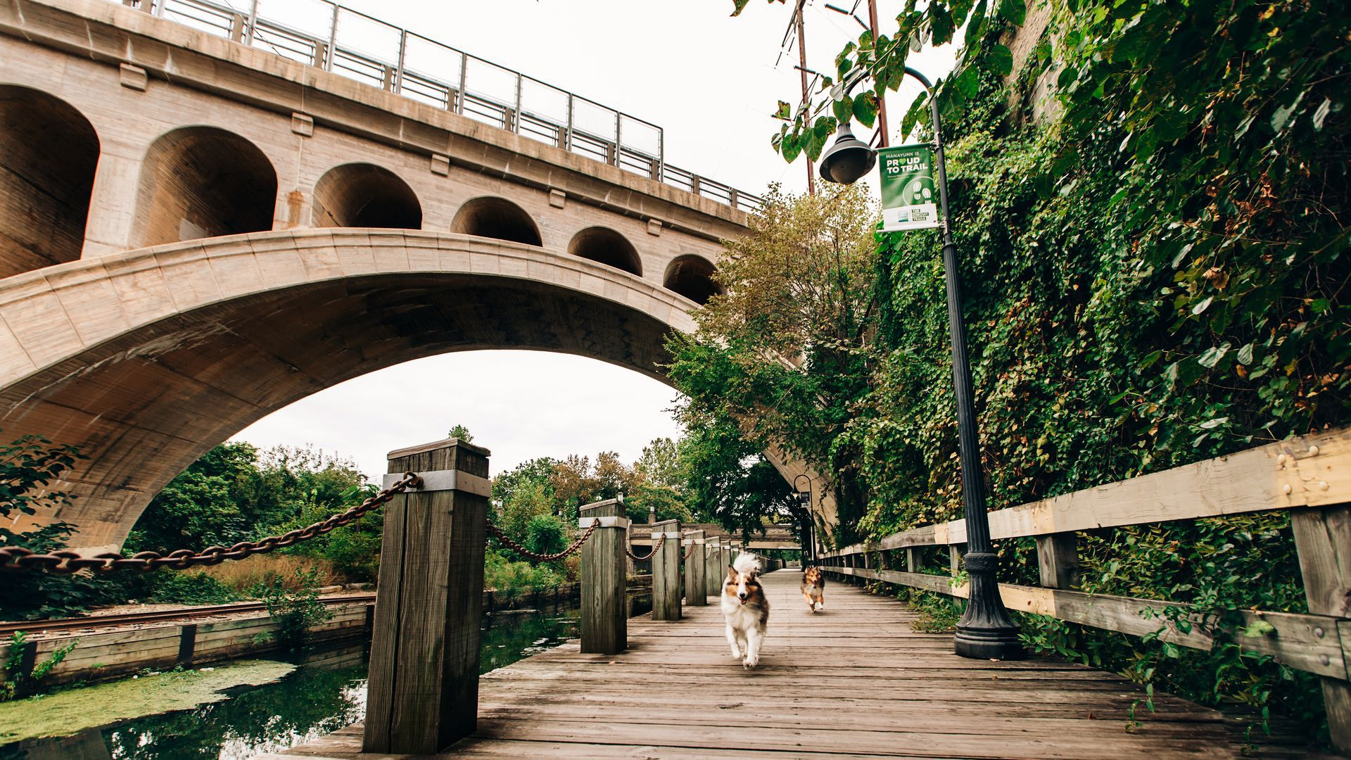 Two dogs run off-leash along the Manayunk Canal Towpath.
